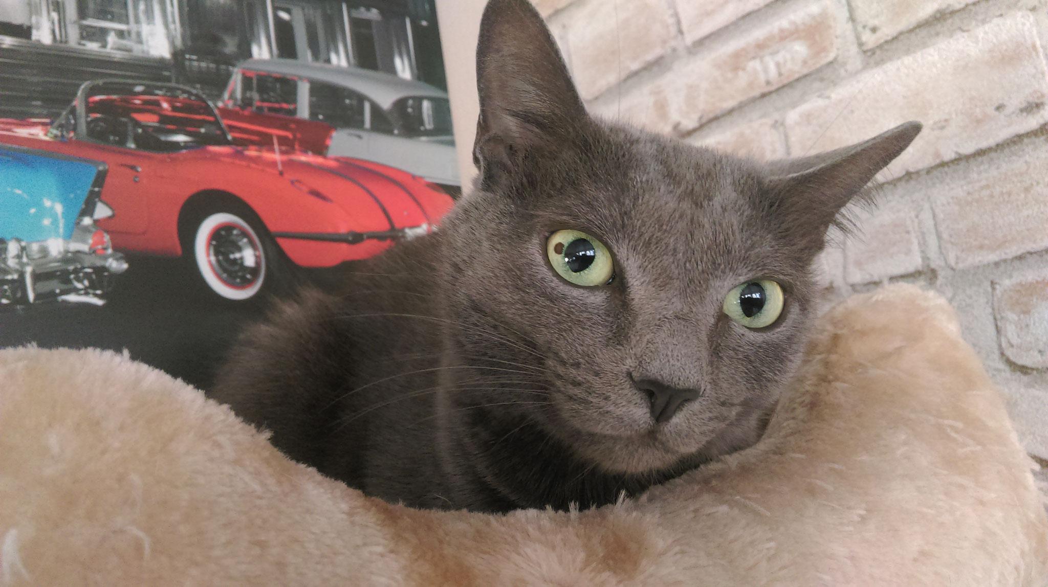 Mike - Catsitting - die Katzenfrau