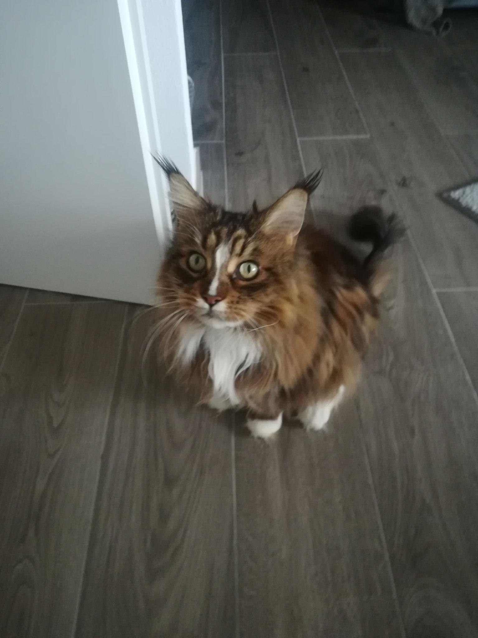 Gwenny - Catsitting Lebach