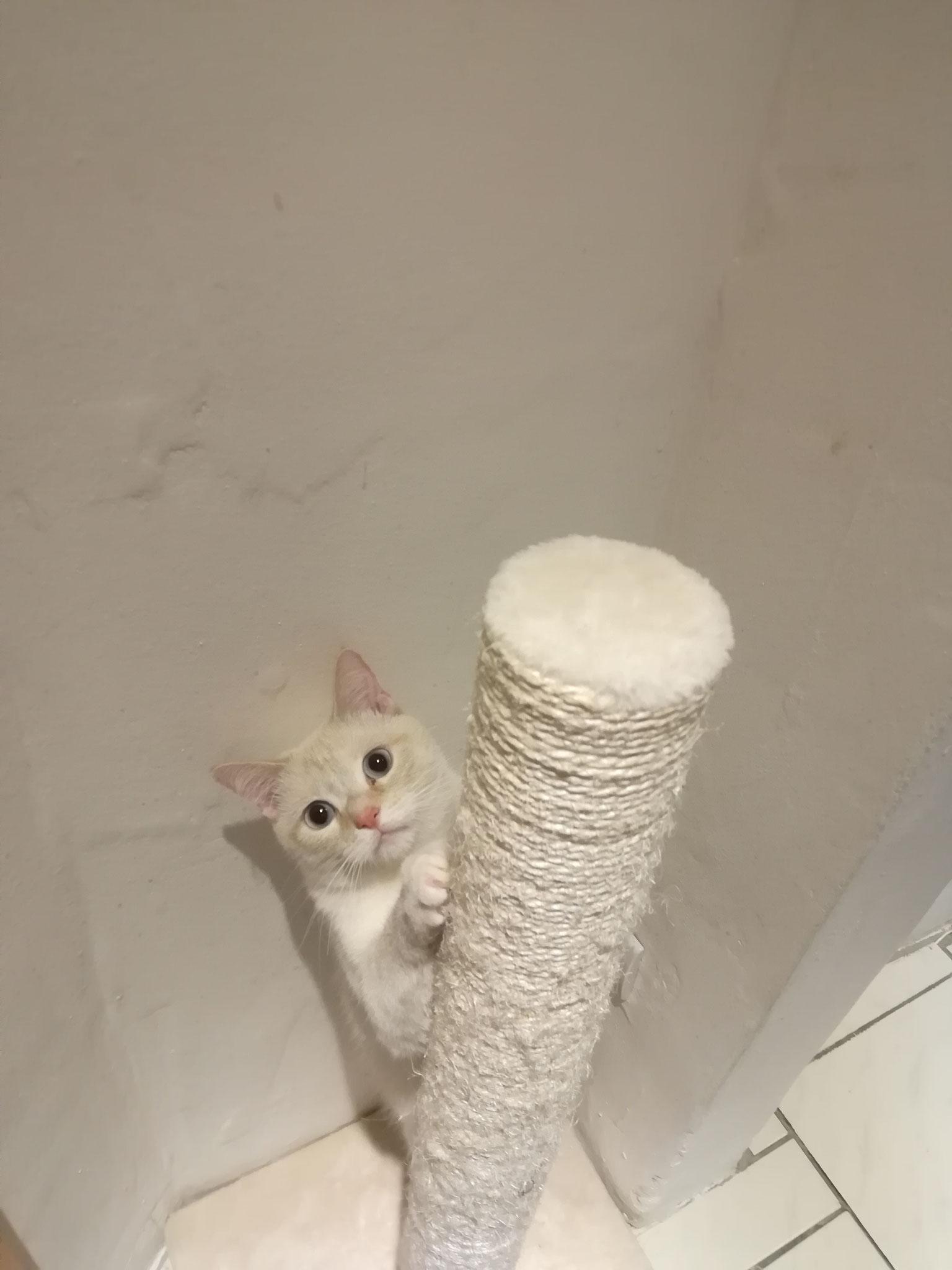 - mobile Katzenbetreuung Großrosseln