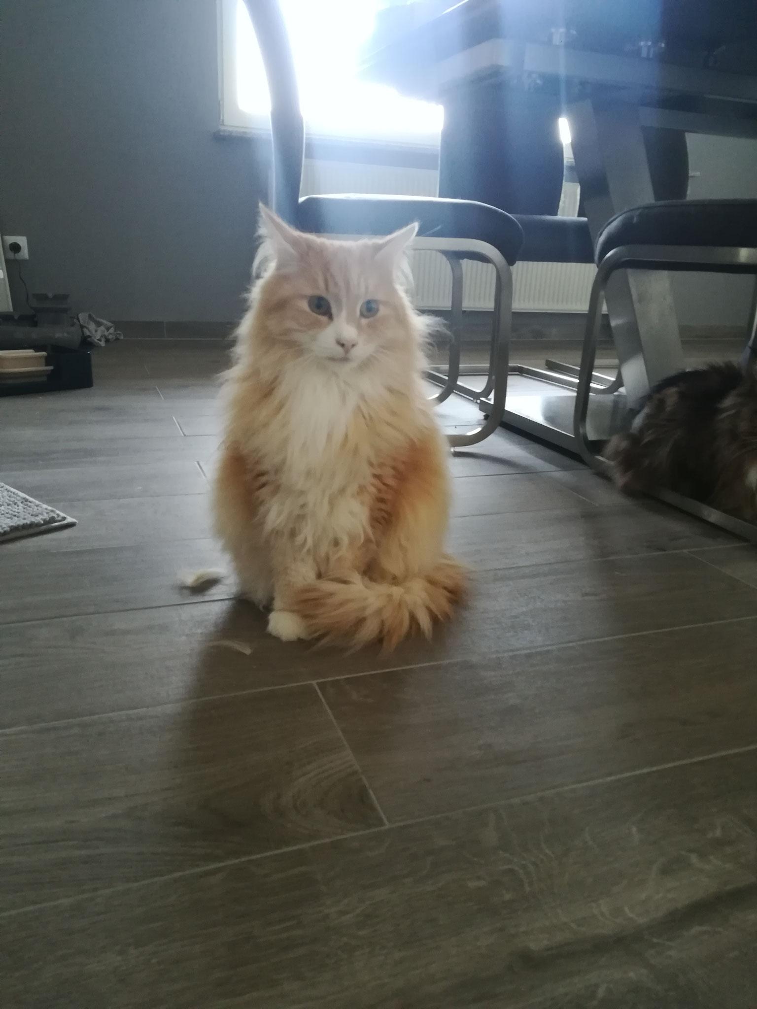 Hurly - Catsitting Lebach