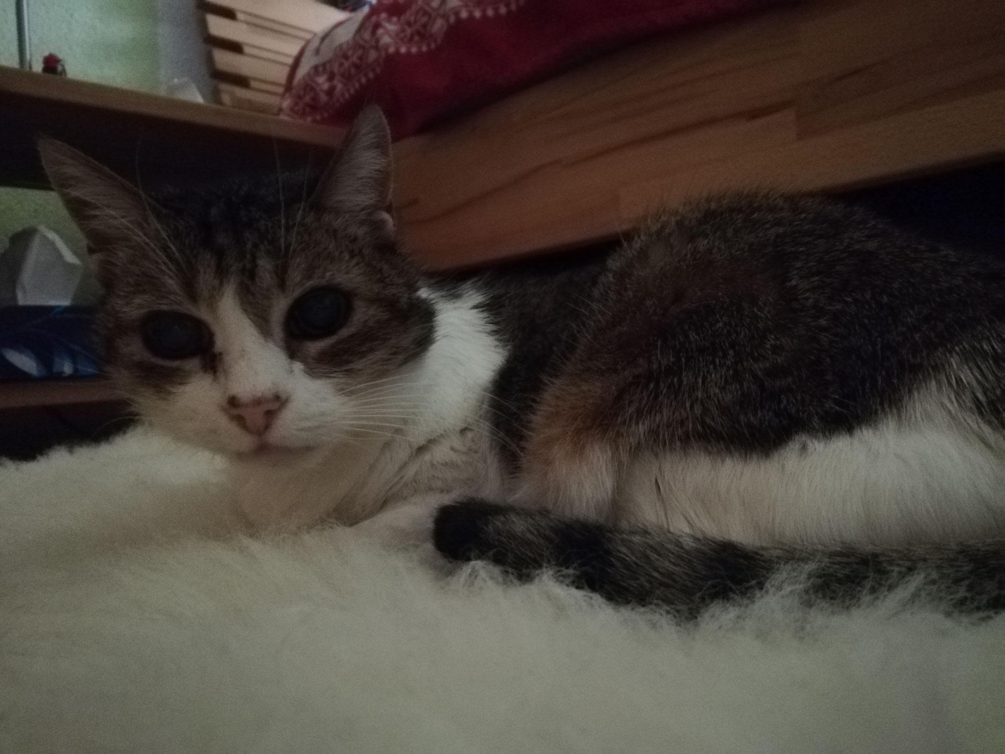 Sheila - mobile Katzenbetreuung St. Wendel