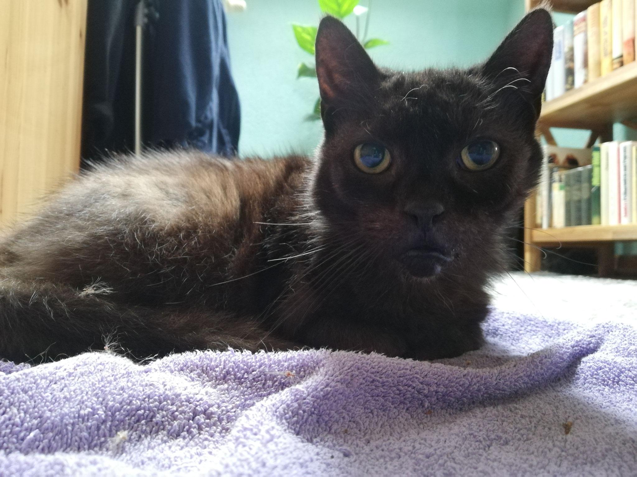 Blacky - Catsitting St. Wendel