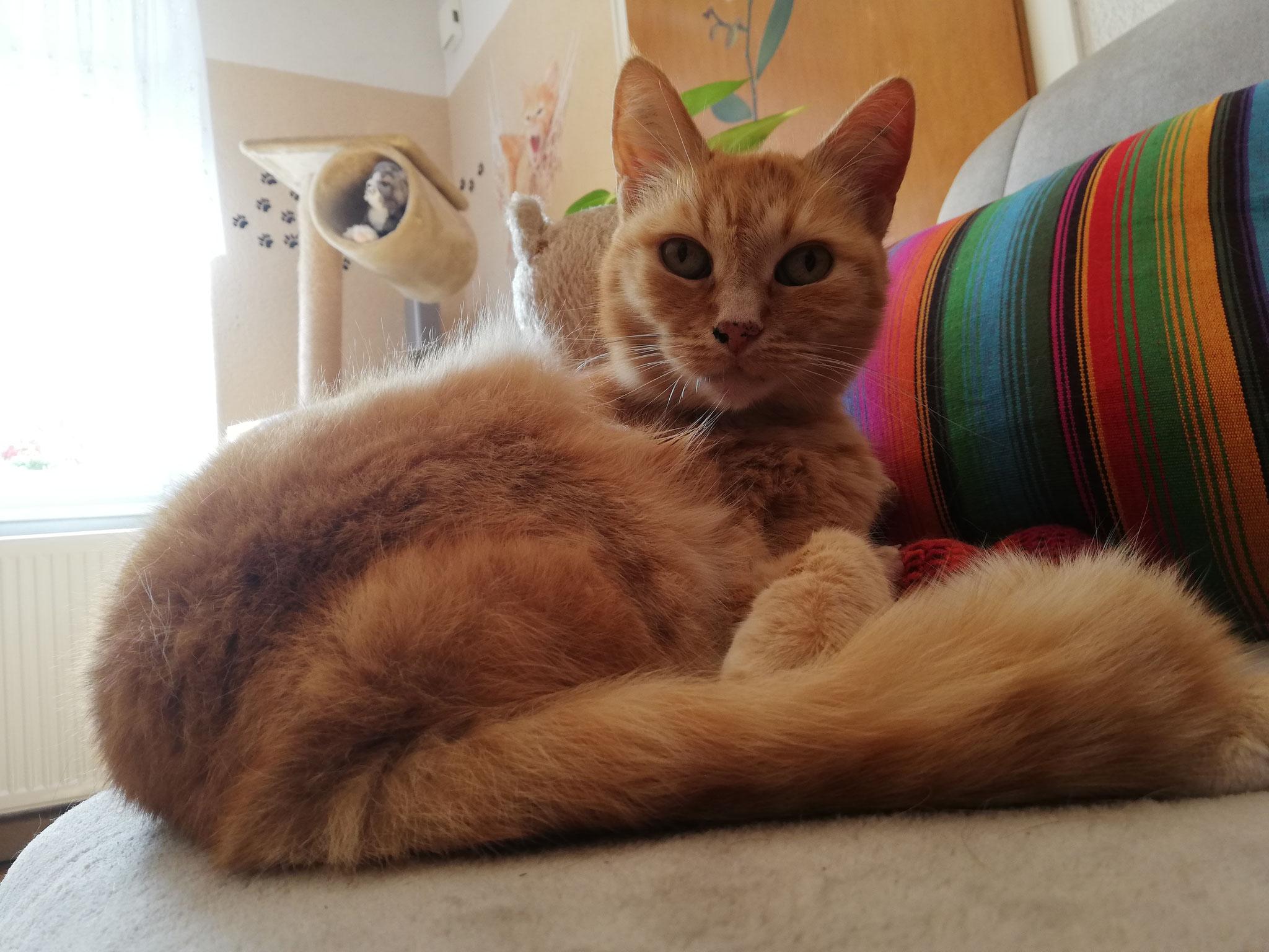 Tiffy - Catsitting St. Wendel