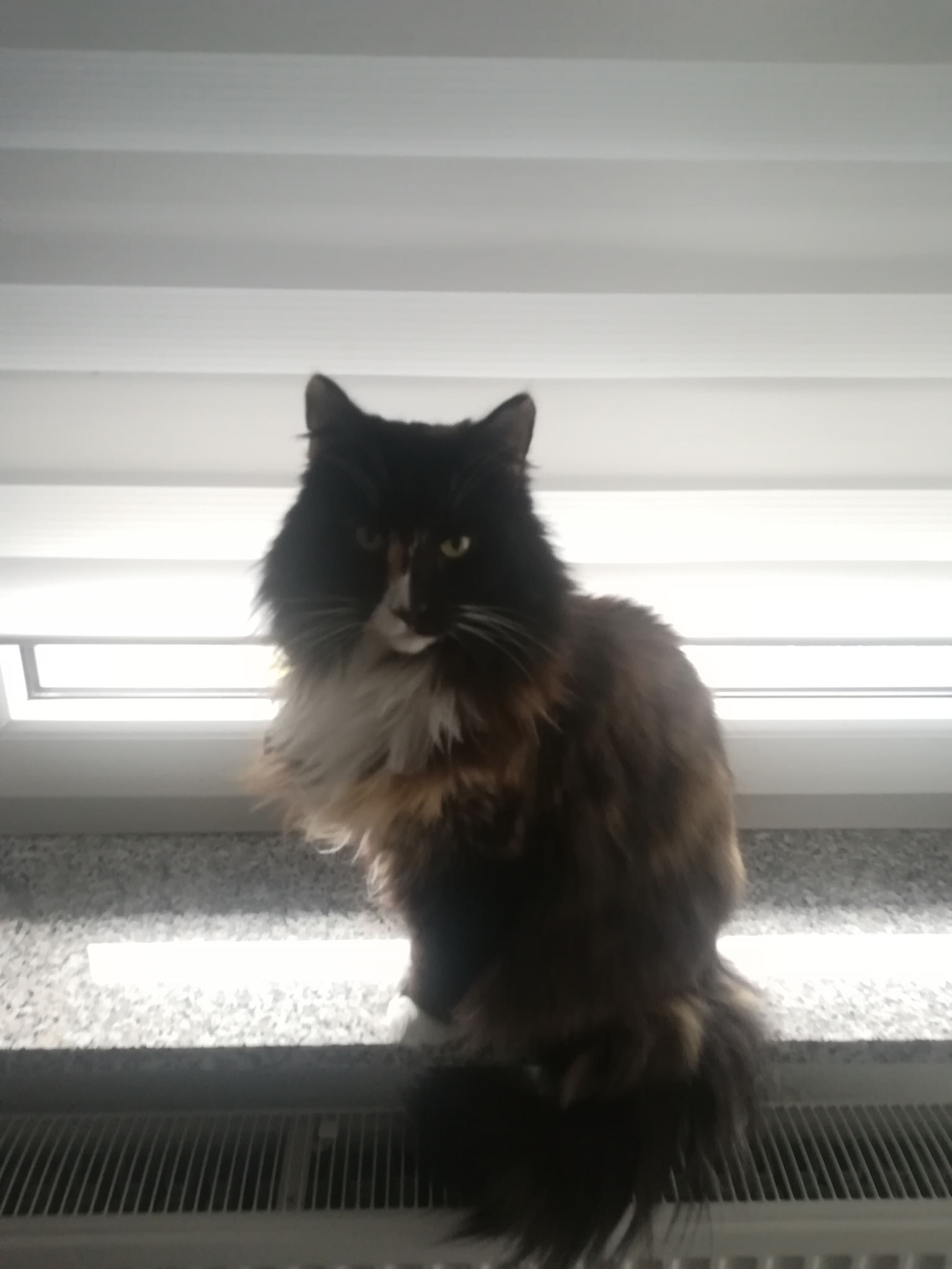 Demi - mobile Katzenbetreuung Lebach
