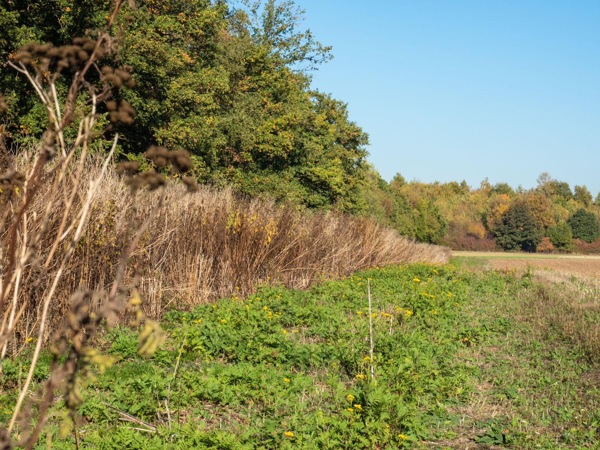 Blühstreifen mit unterschiedlichem Bewuchs am Waldrand