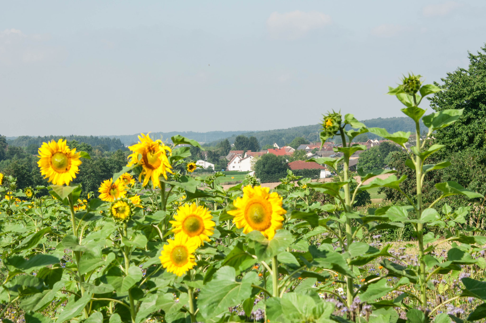 Bollnbach