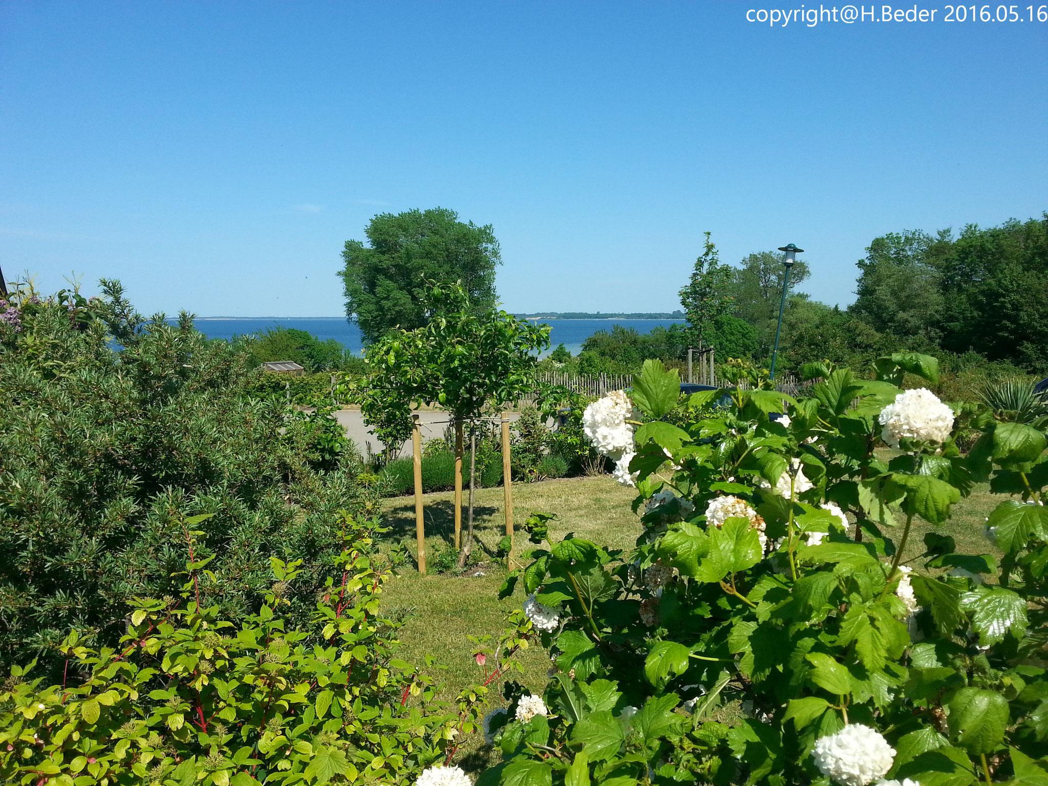Der Garten mit Blick auf die Wiek