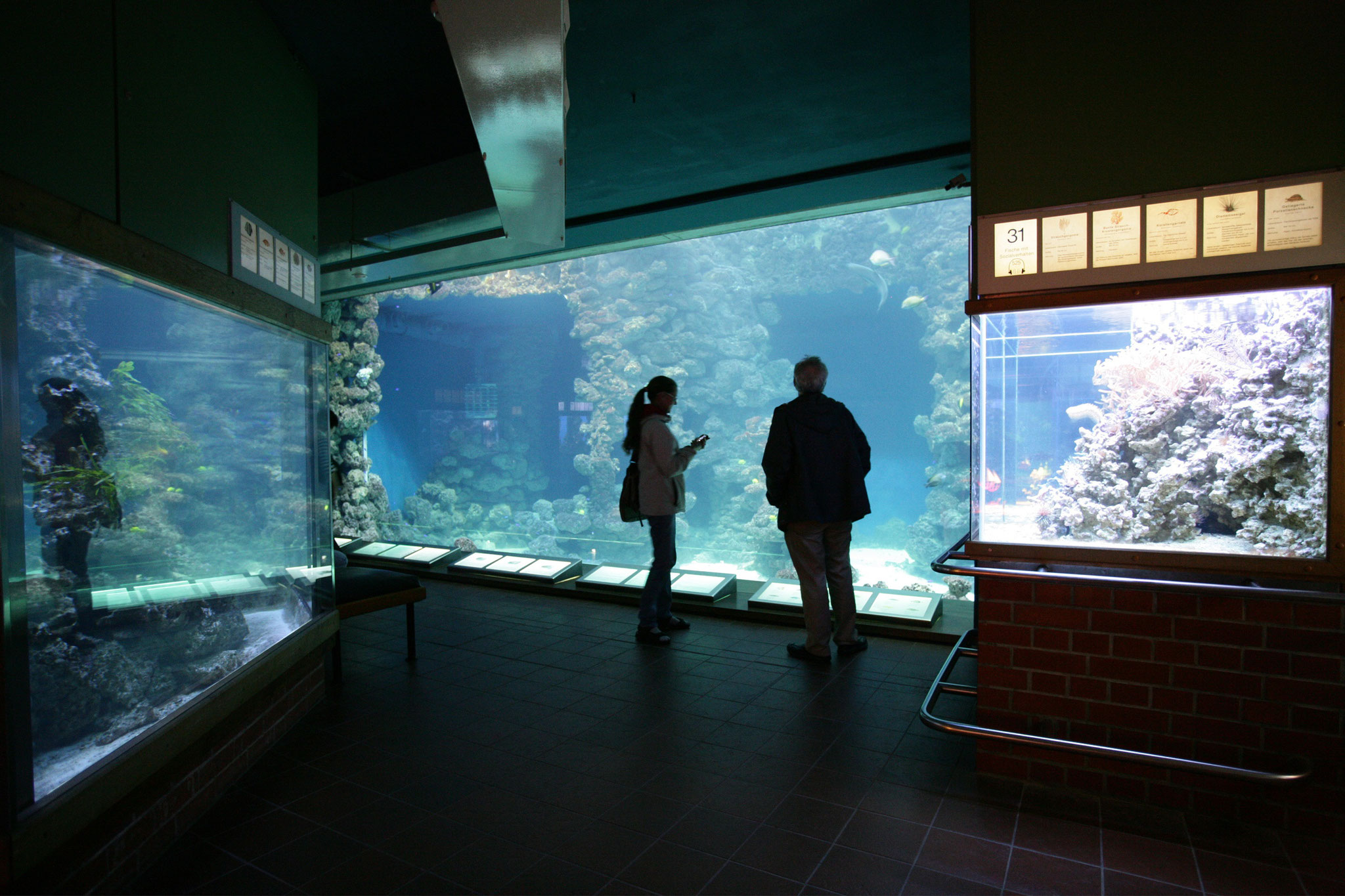 Panoramascheibe im tropischen Aquarium (Foto: Johannes-Maria Schlorke / Deutsches Meeresmuseum)