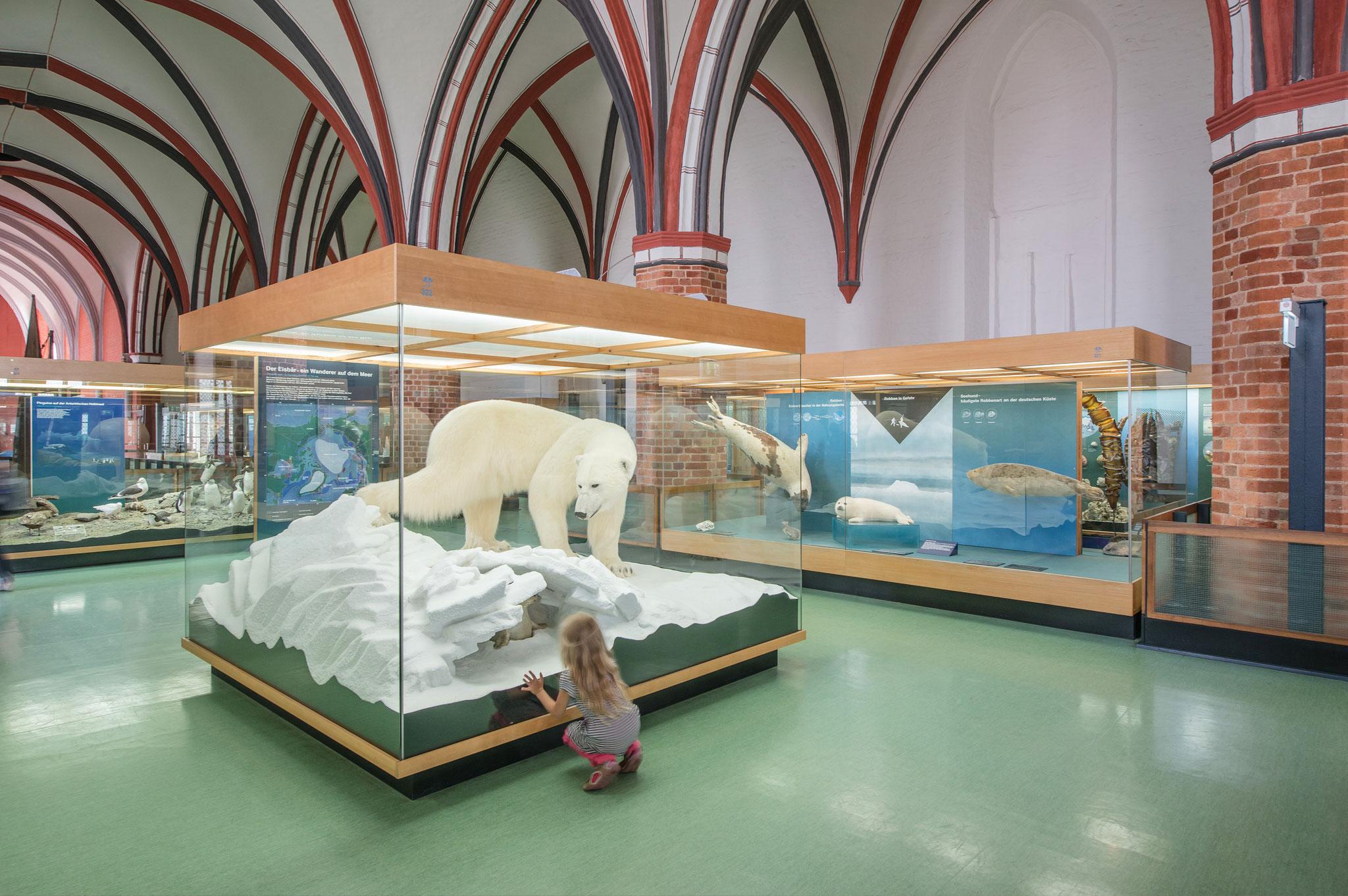 Präparierter Eisbär im mittelalterlichen Gewölbe (Foto: Johannes-Maria Schlorke / Deutsches Meeresmuseum)