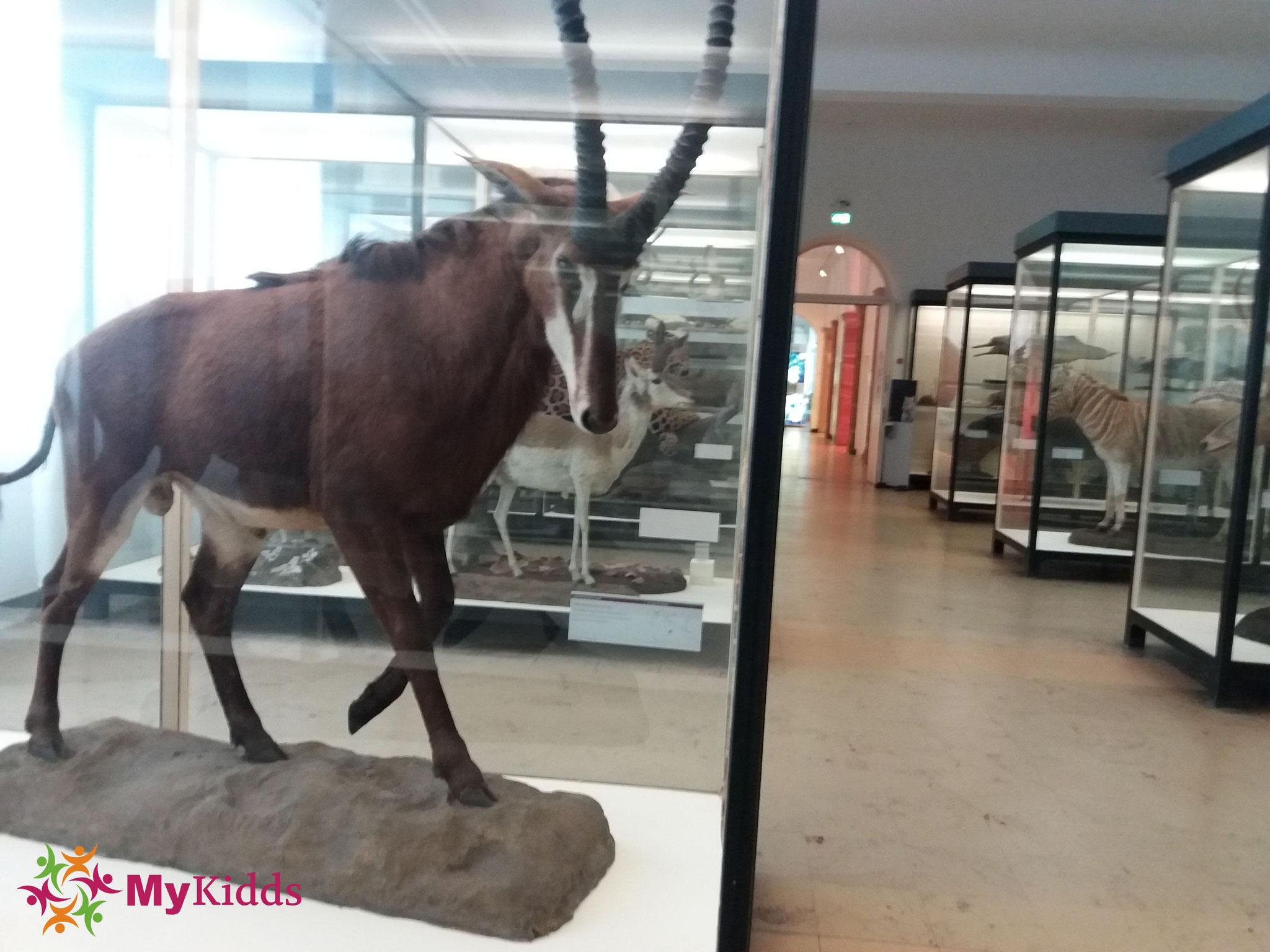 senckenberg museum frankfurt parken