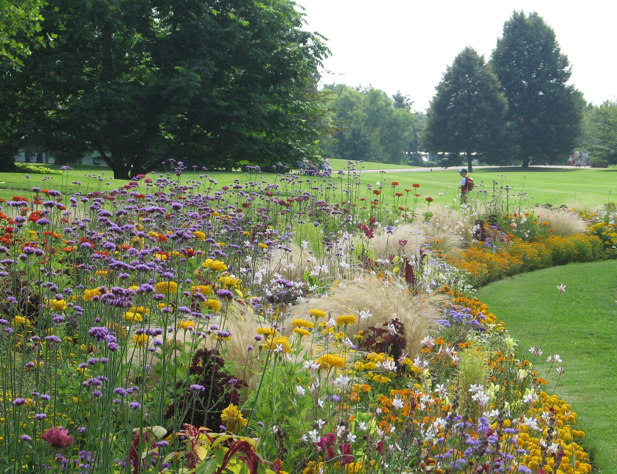 Sommerblumen (© Grün Berlin)