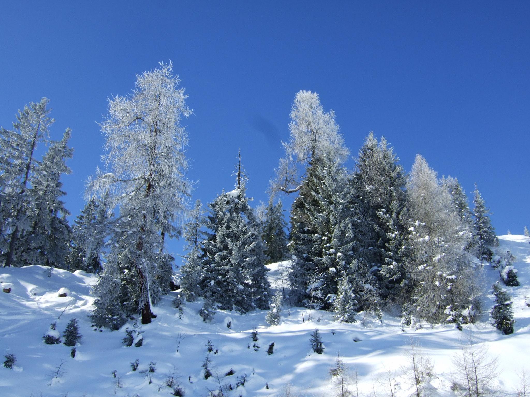 unterwegs verschneite Bäume