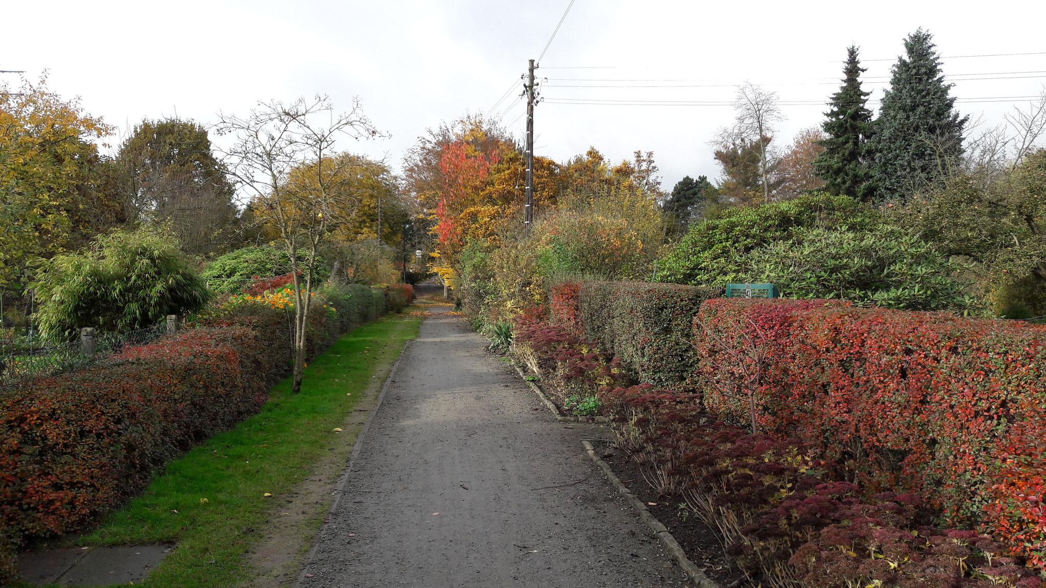 Eichenweg in der Altanlage November 2016 in Richtung City