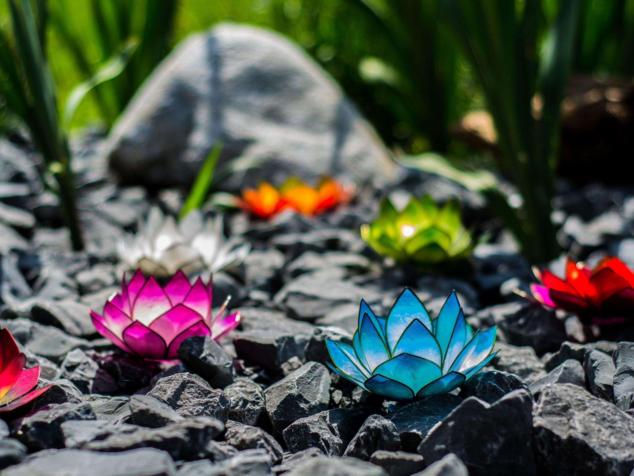 Lotus-Windlichter