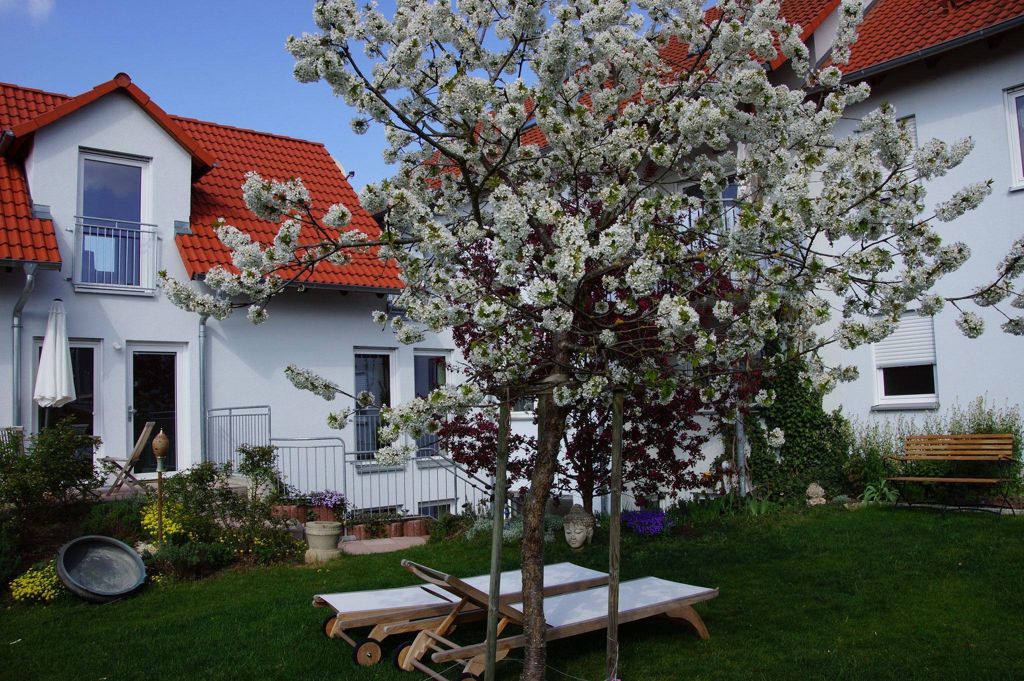Karunahaus im Frühling