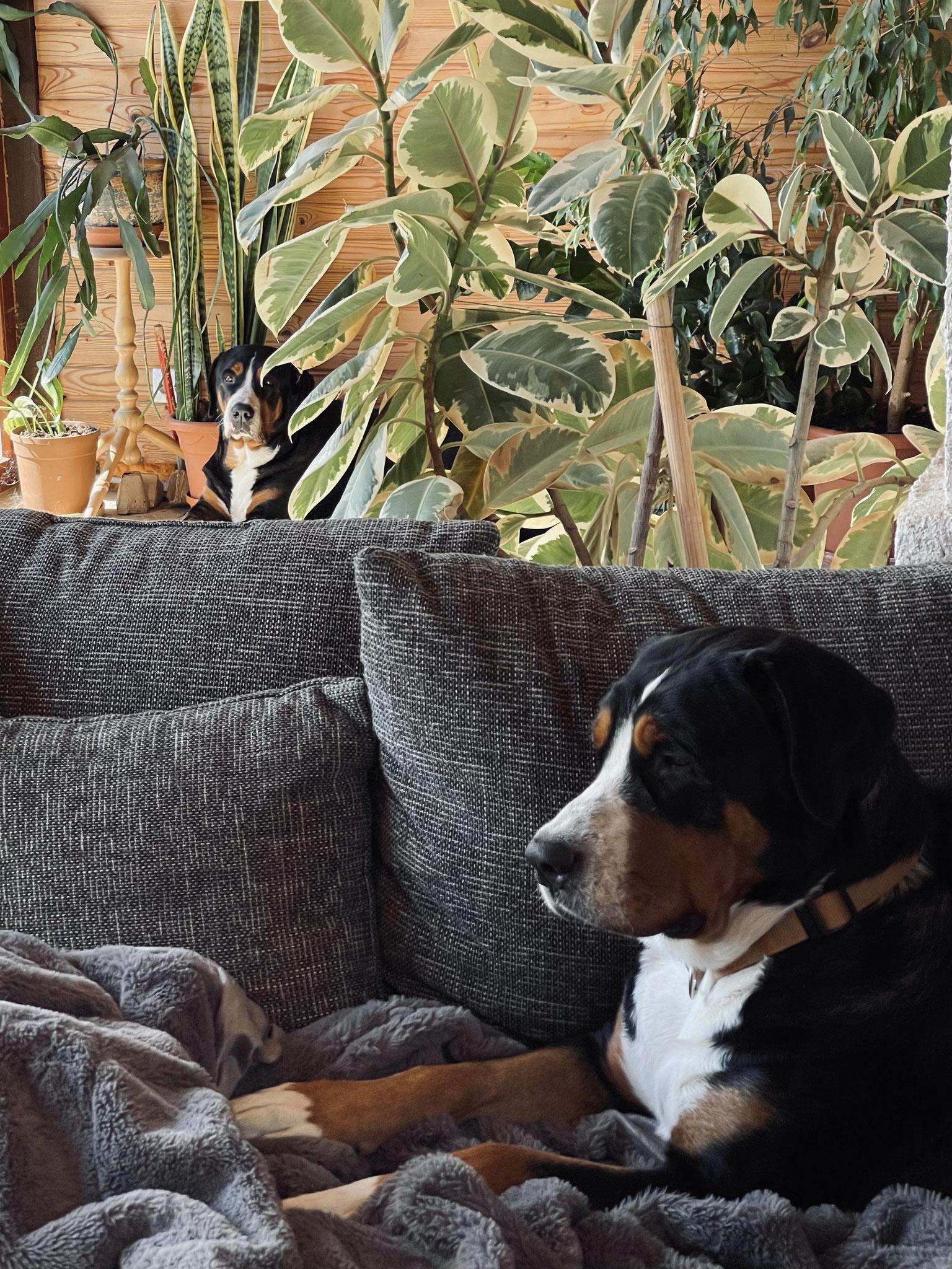 Wuddy&Bella