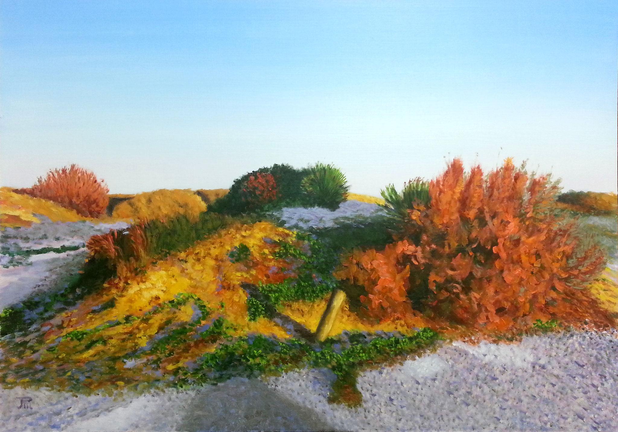 Dunas con arbusto rojo