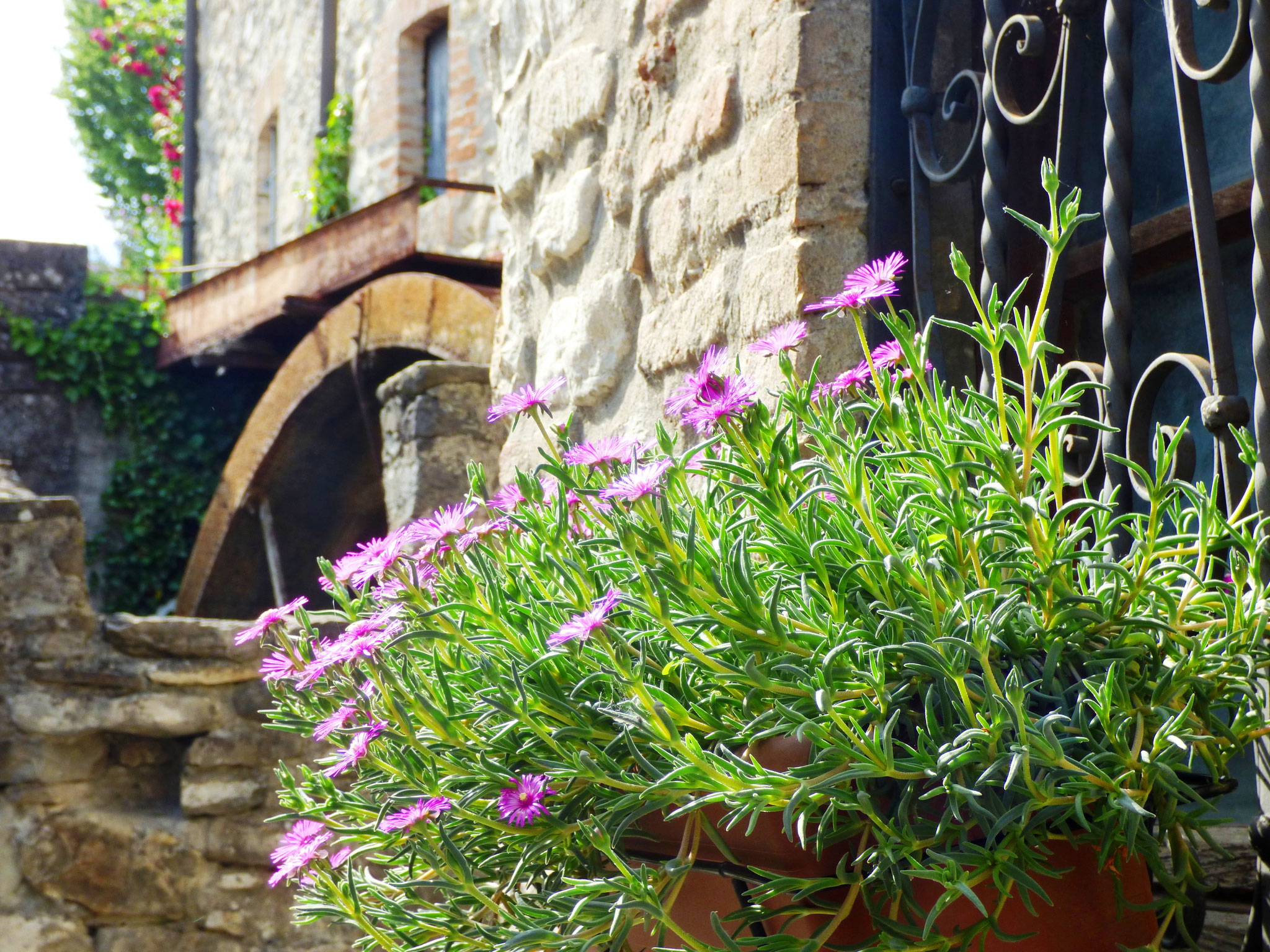 Artre : Bobbio - Il Castello in Fiore II ed. 28 -29 maggio 2016