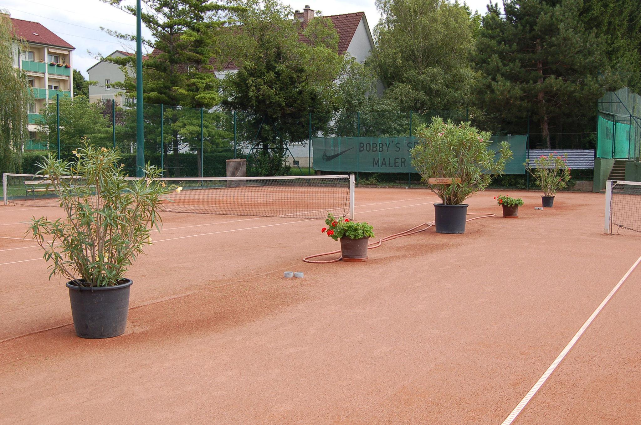 Tennisplätze in Enzesfeld