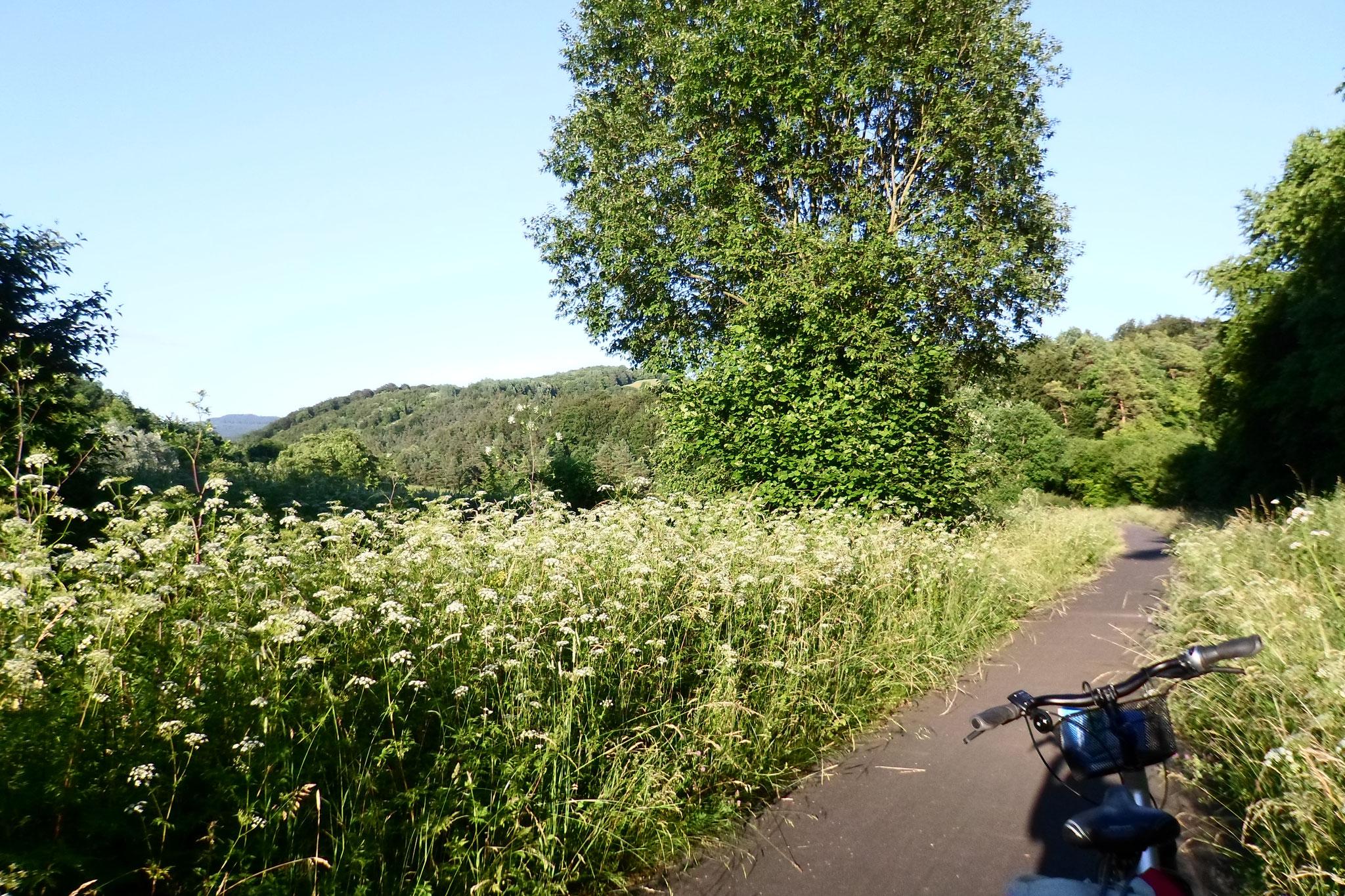 Radweg zwischen Wenigentaft und Großentaft