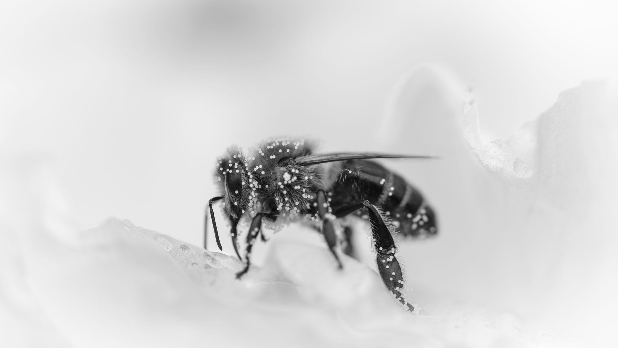 Konfetti Bee