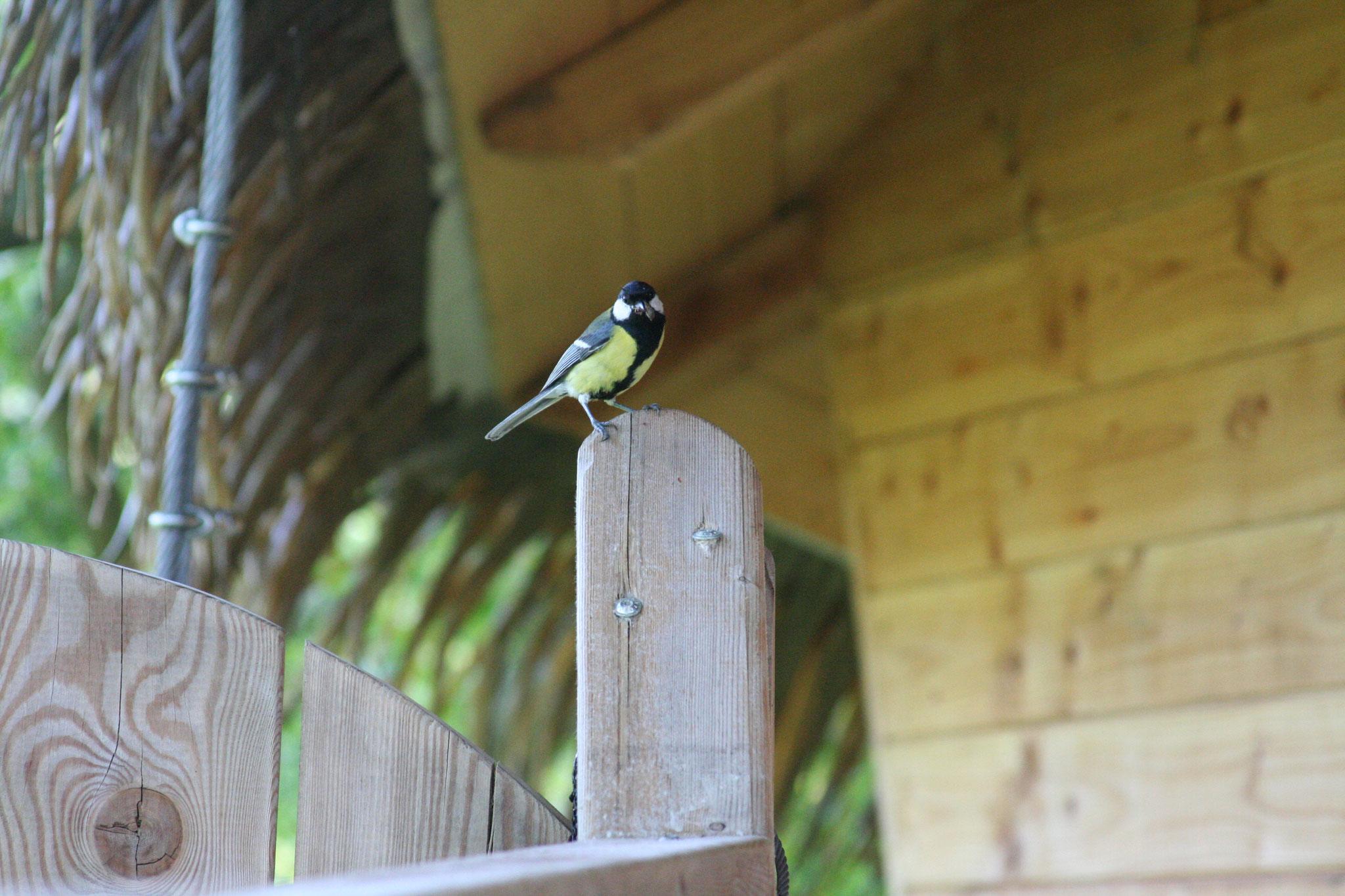 Petit oiseau dans le camping en Baie de Somme