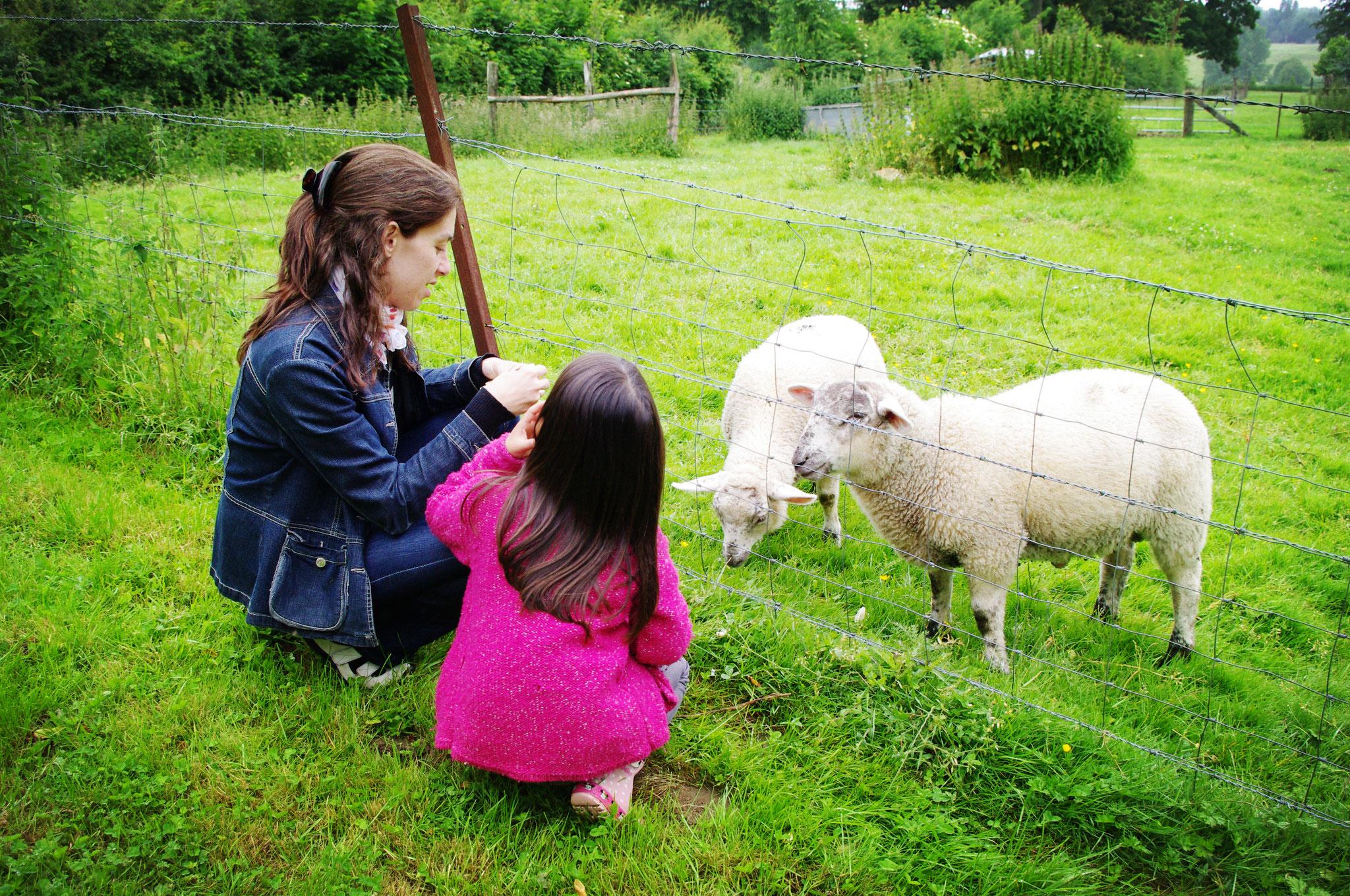 Profiter votre séjour avec votre famille dans la nature en Baie de Somme