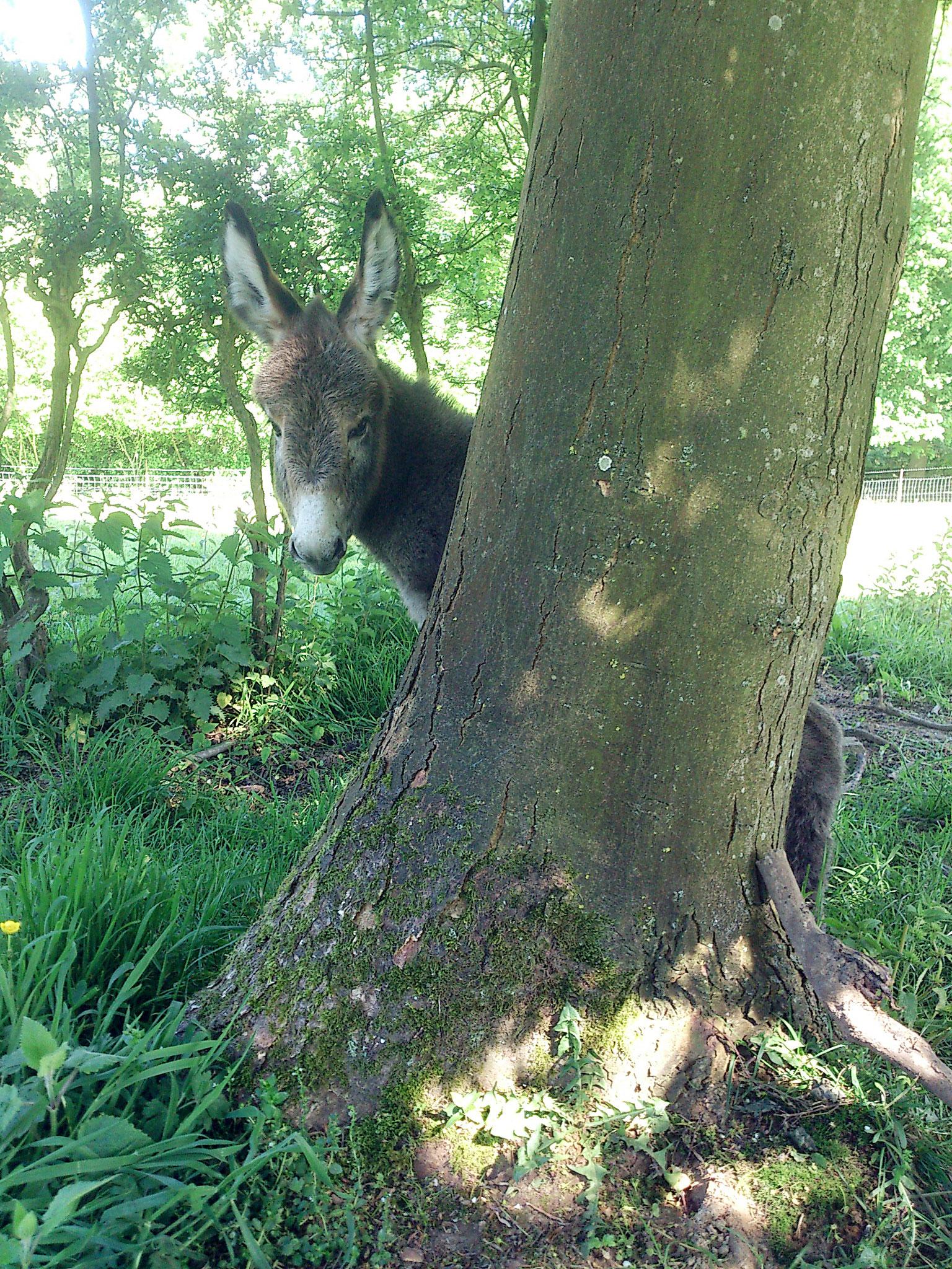 Louer un séjour insolite avec un aire des animaux dans le camping