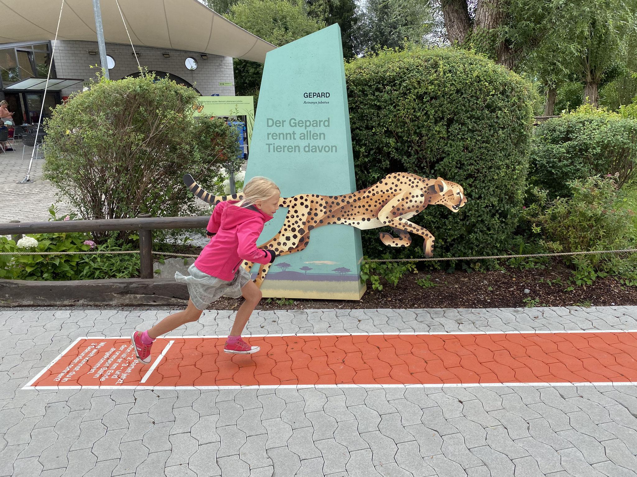 hast du dich schon mal mit einem Gepard gemessen?