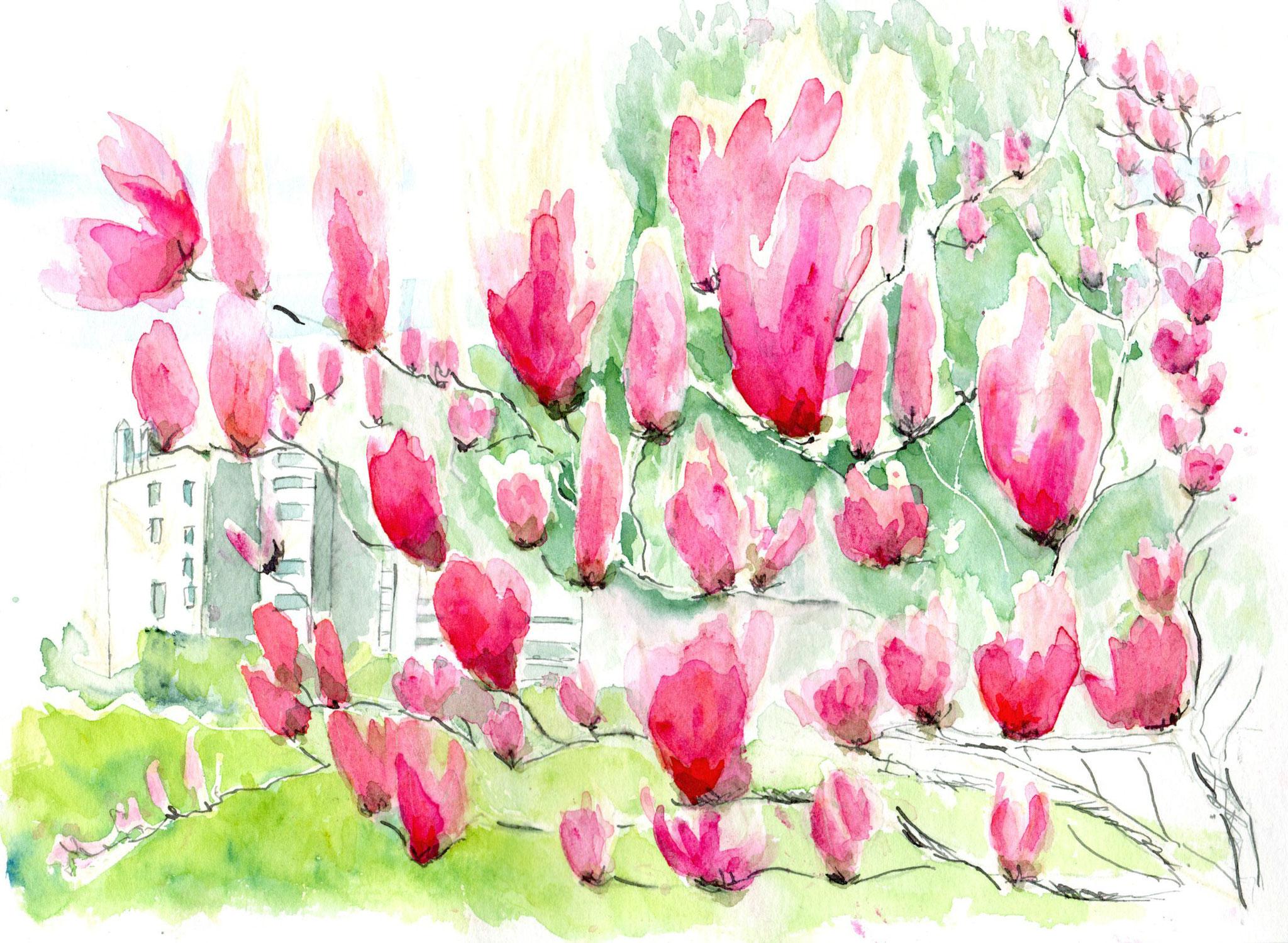 Le magniolia tulipier dans le parc de la Reynerie