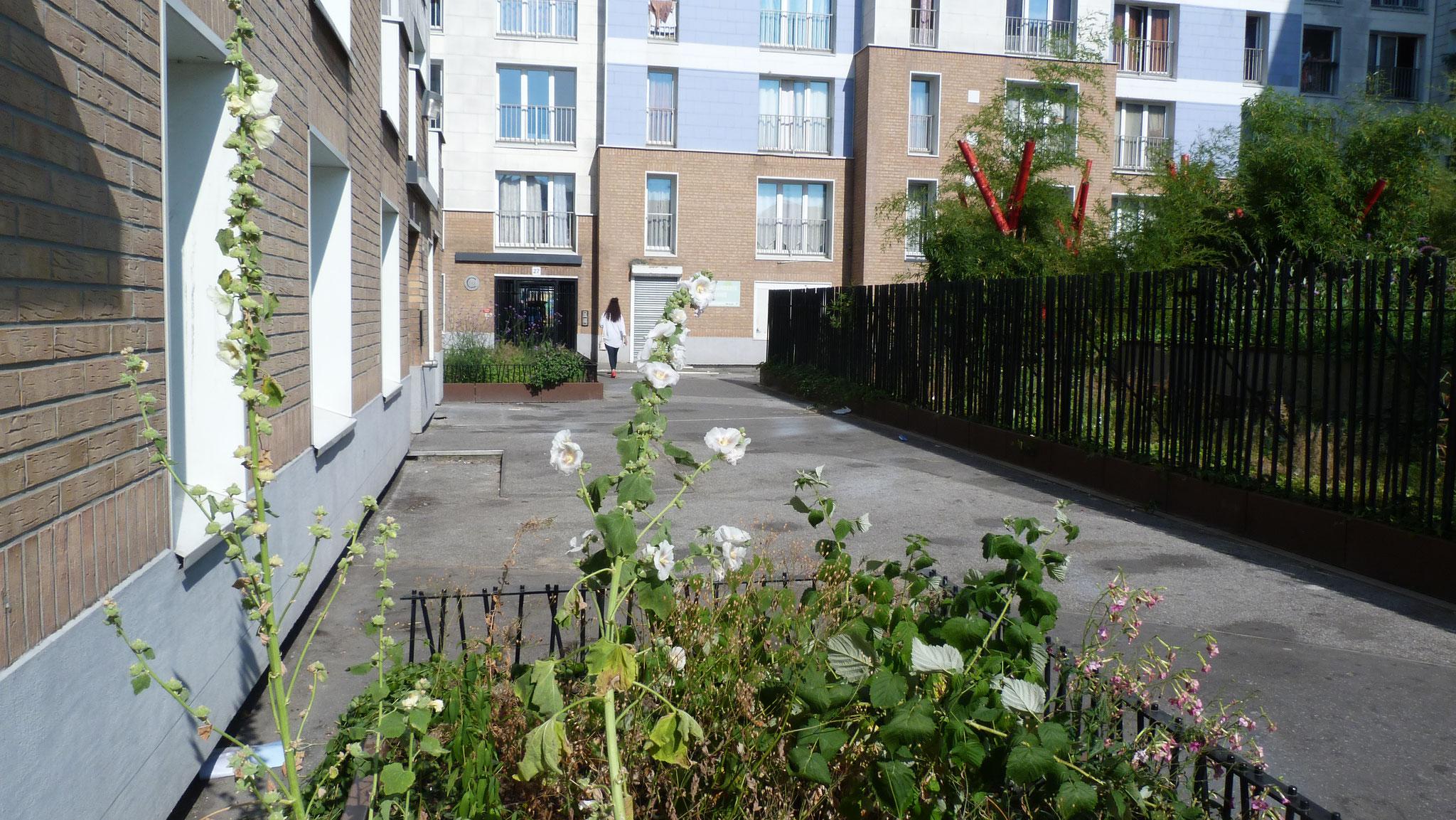 Abords de logements - Fleurs en commun