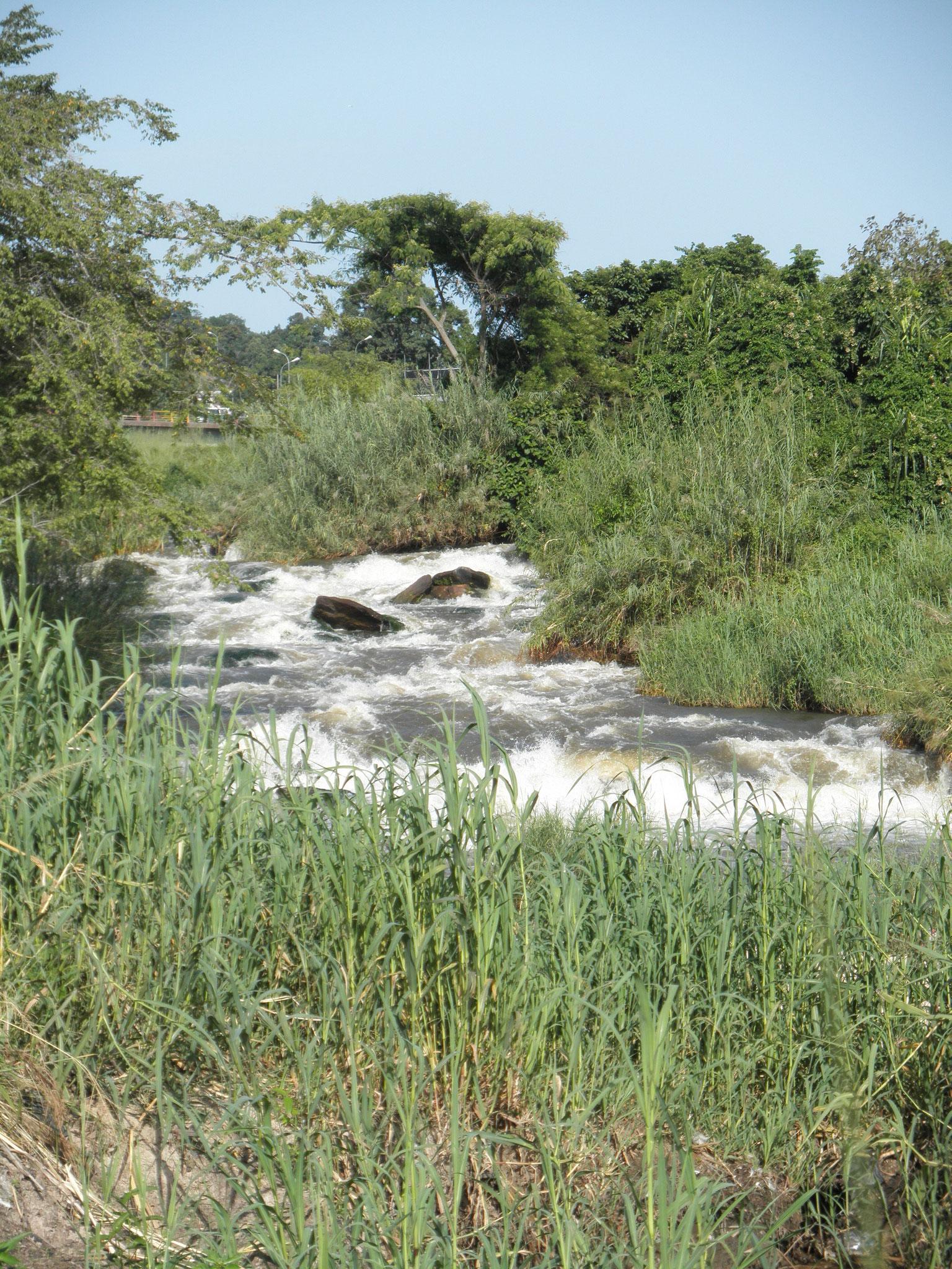 Affluent du fleuve Congo
