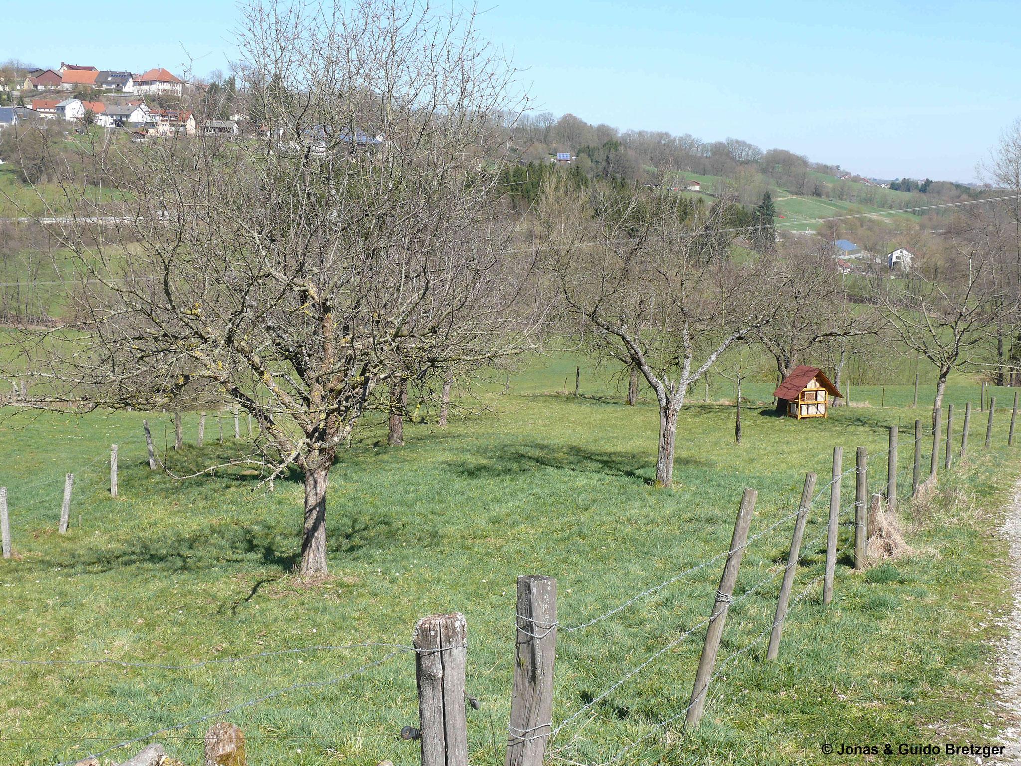 Obstabaumgarten im Frühjahr