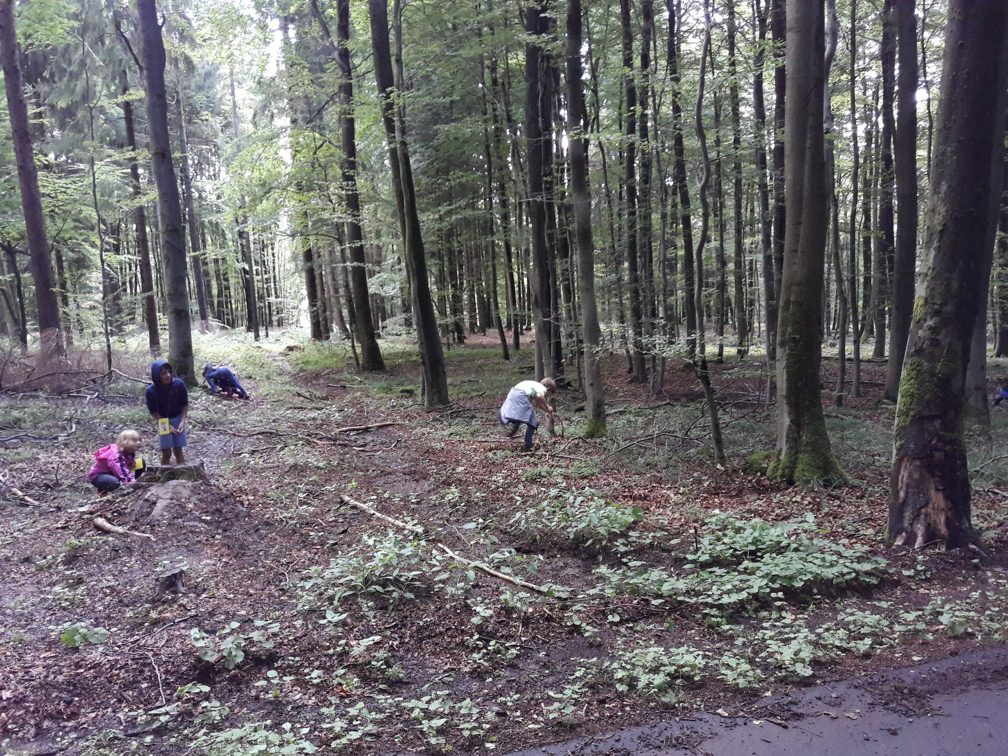 Fleißige Eichhörnchen im Wald!