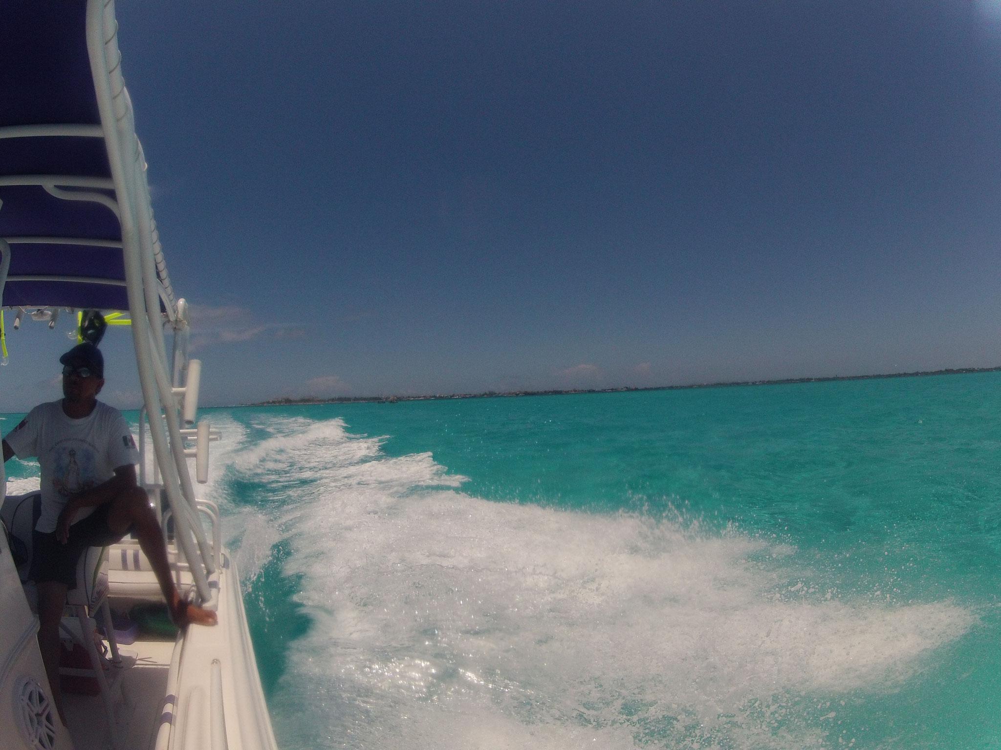 Mit dem Boot zu den Walhaien