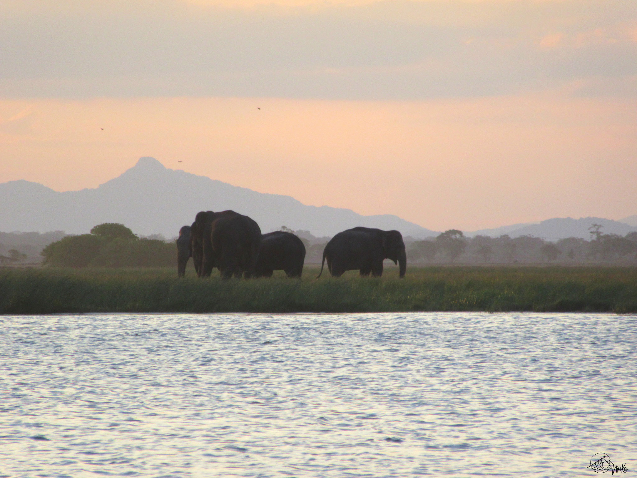 Elephants at the lagoon