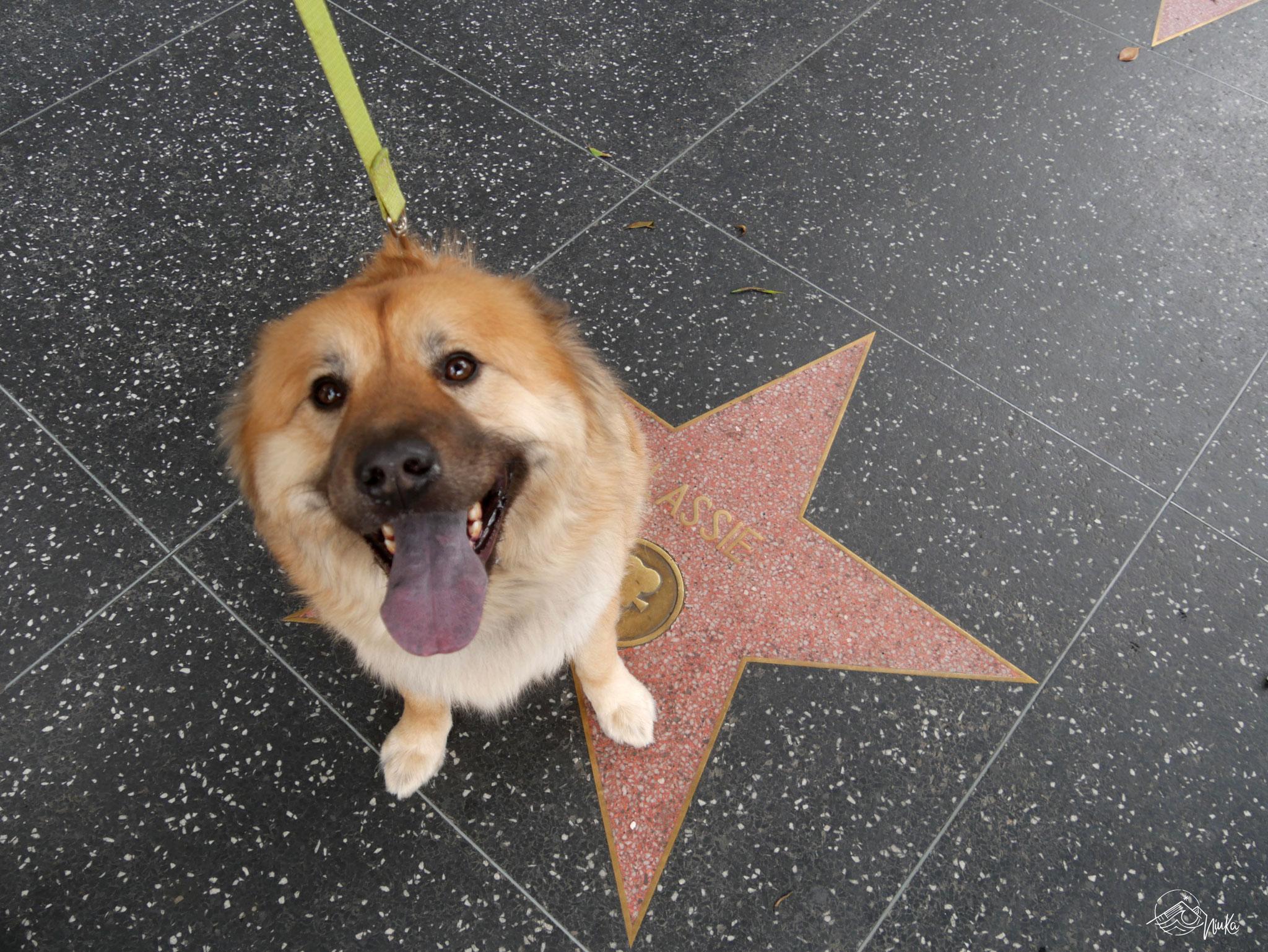 Lassie´s Stern auf dem Walk of Fame