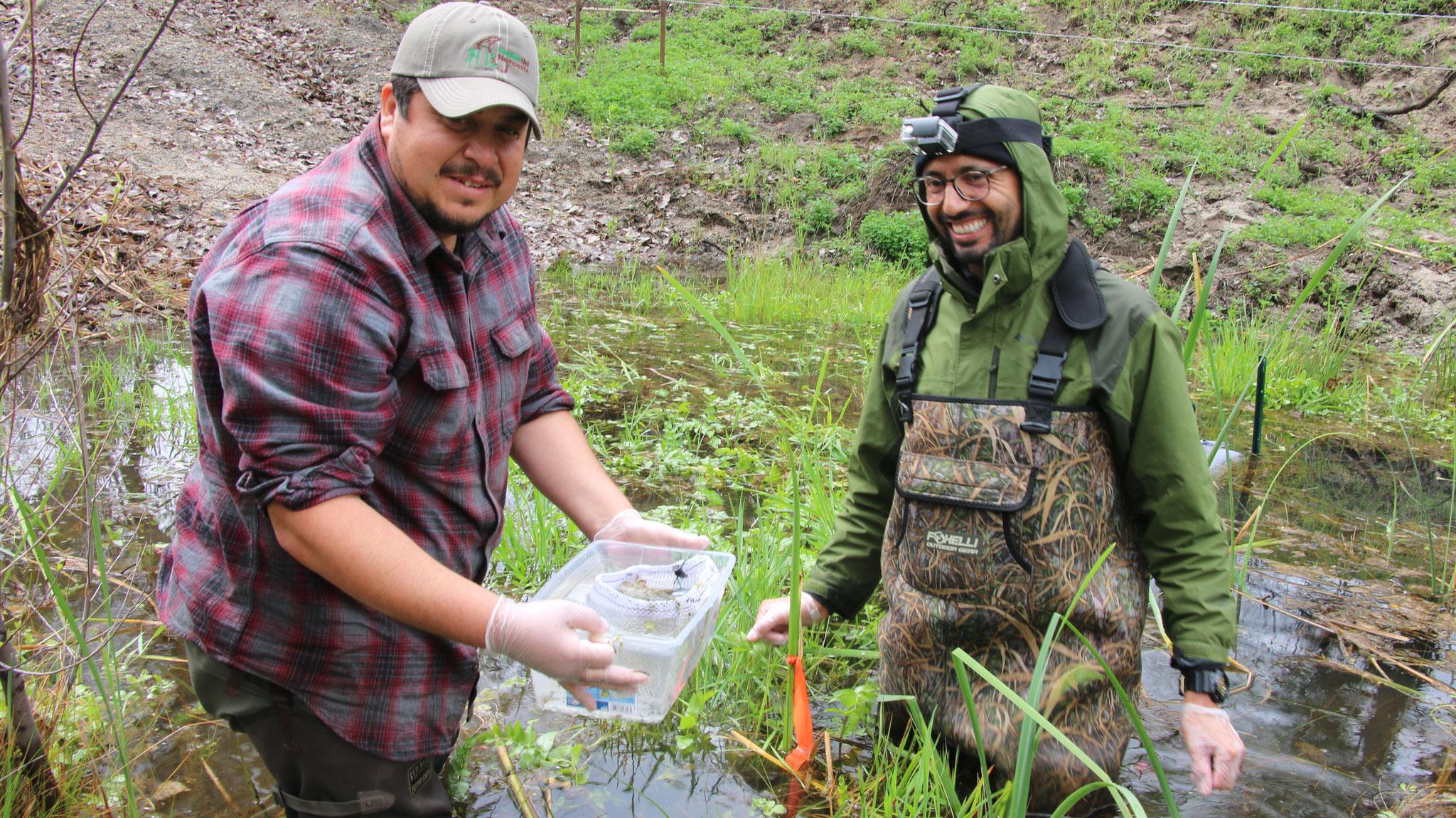 Jorge H. Valdez (FAUNO) y Frank Santana (SDNHM) preparando masas de huevos para ser transportadas