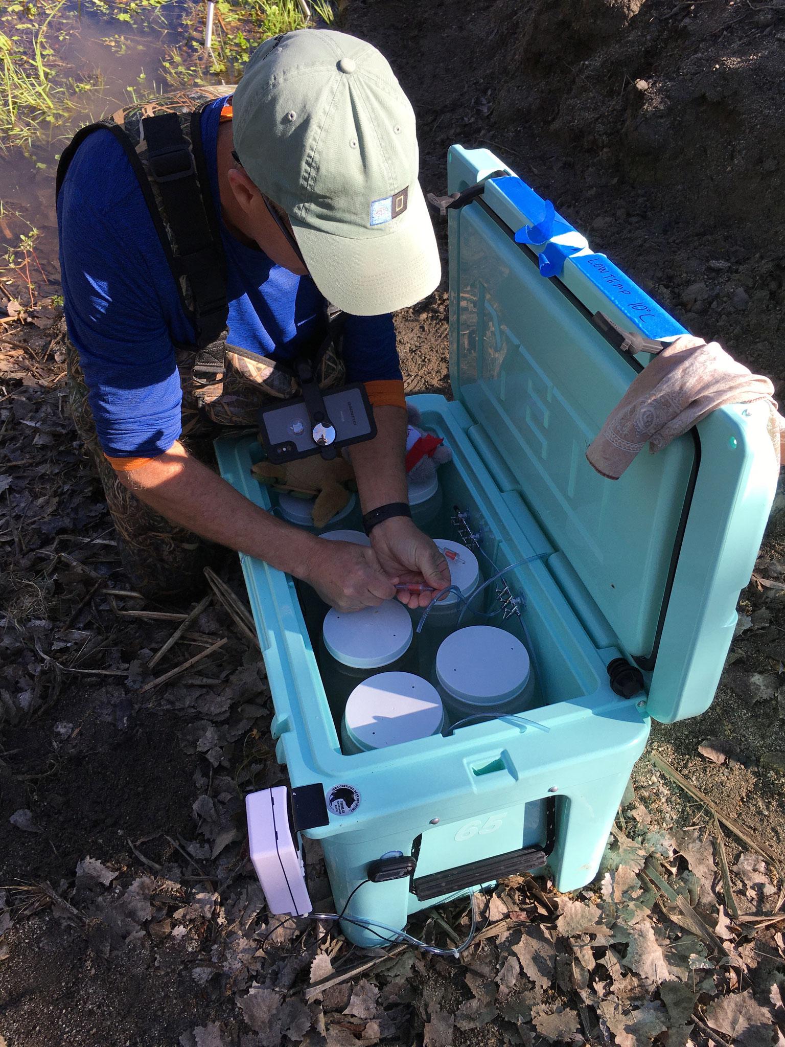 Dr. Brad Hollingsworth (SDNHM) preparando hielera con masa de huevos