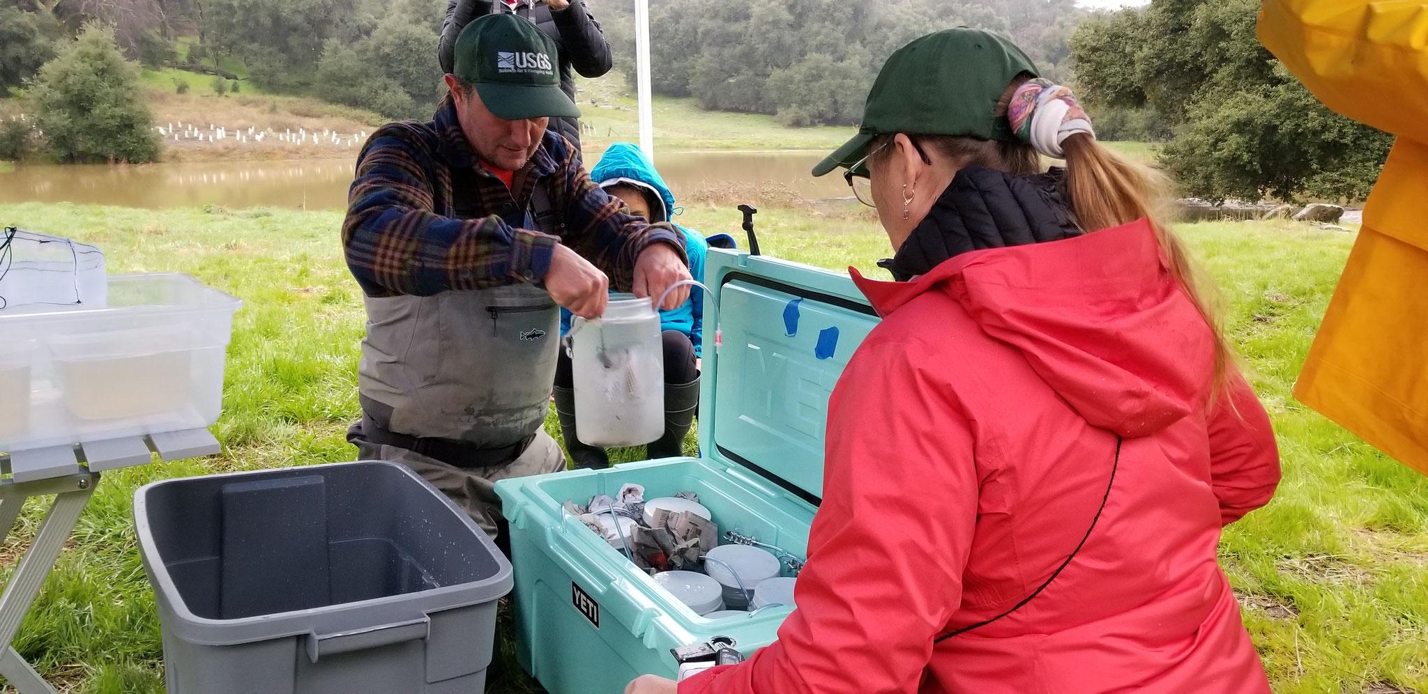 Biólogos de la USGS en California recibiendo las masas de huevo en los sitios de reintroducción