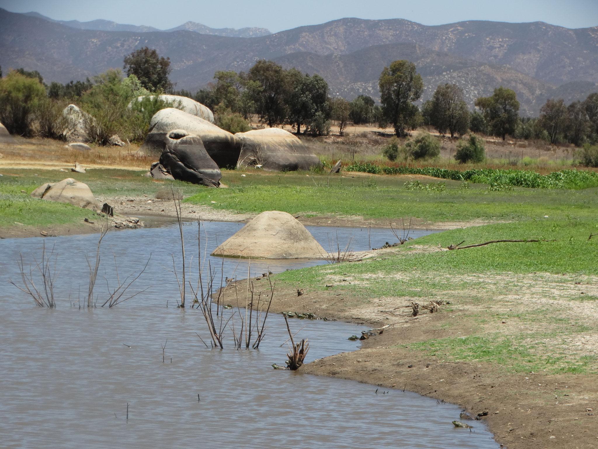 Sitio con abundante presencia de rana toro