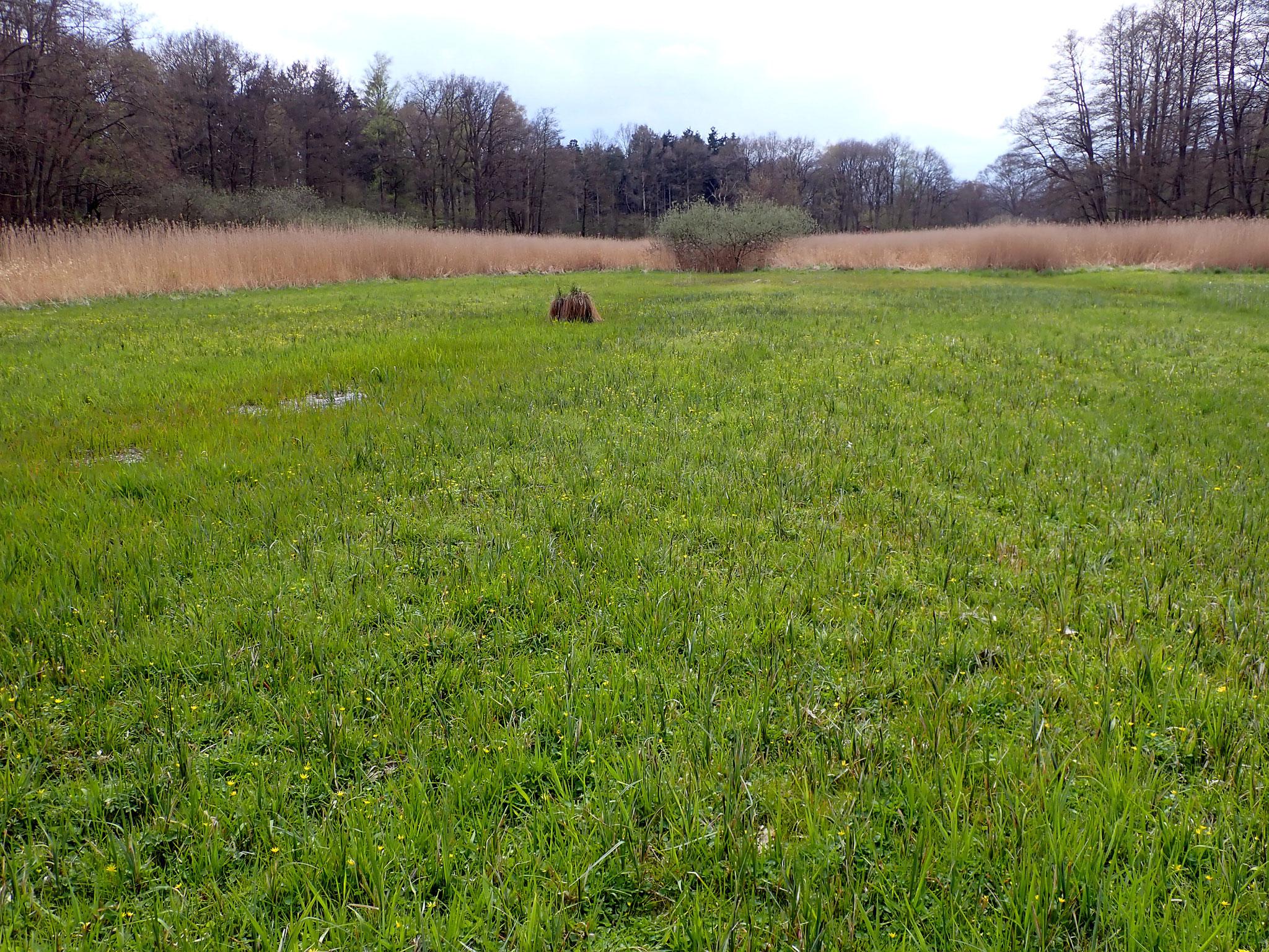 Blick über den ergrünenden gemähten Bereich der Fläche.