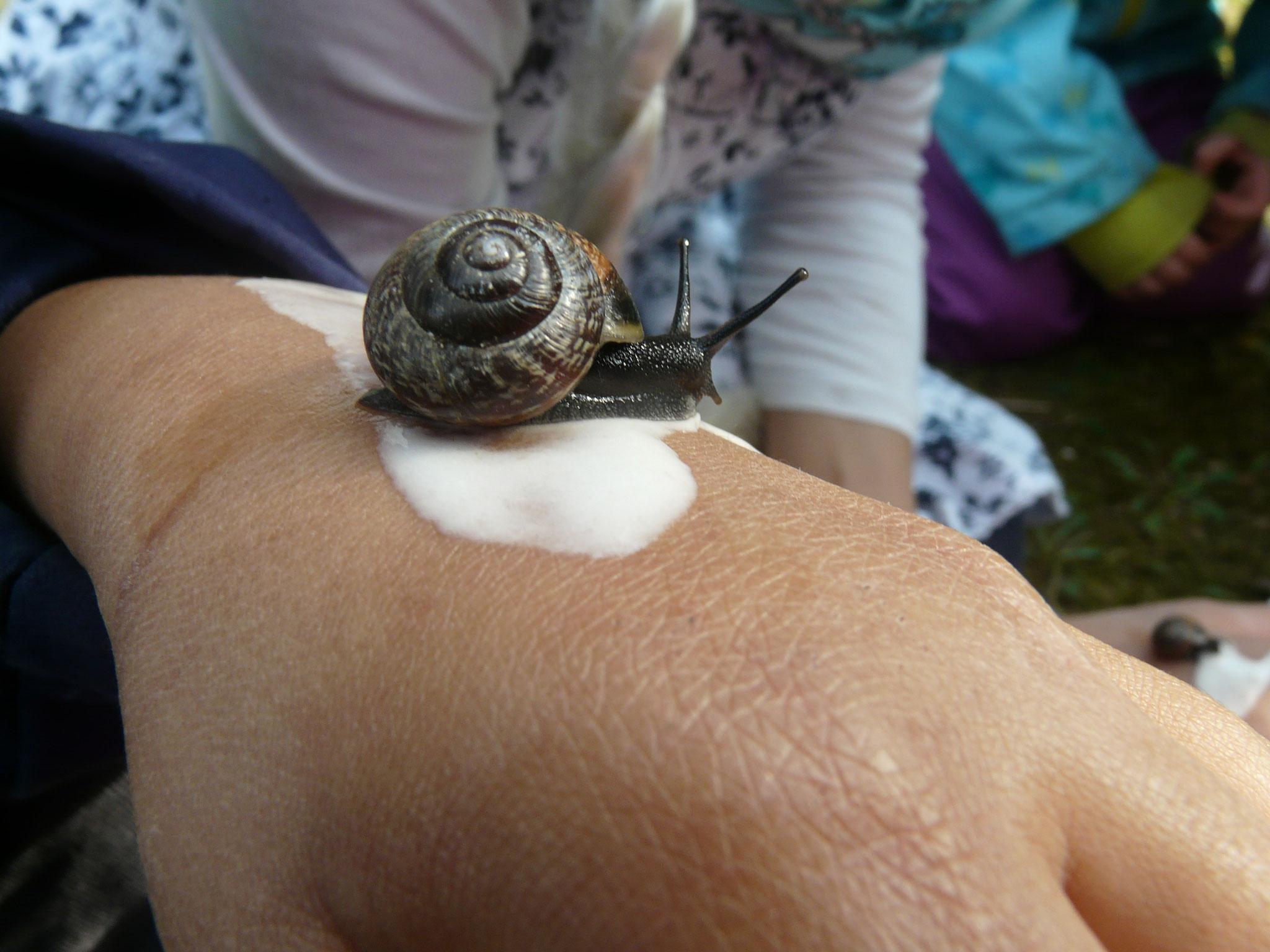 Wie fressen Schnecken? Mit Hilfe eines Wasser-Mehl-Gemisches konnten die Kinder es auf der eigenen Hand erleben.