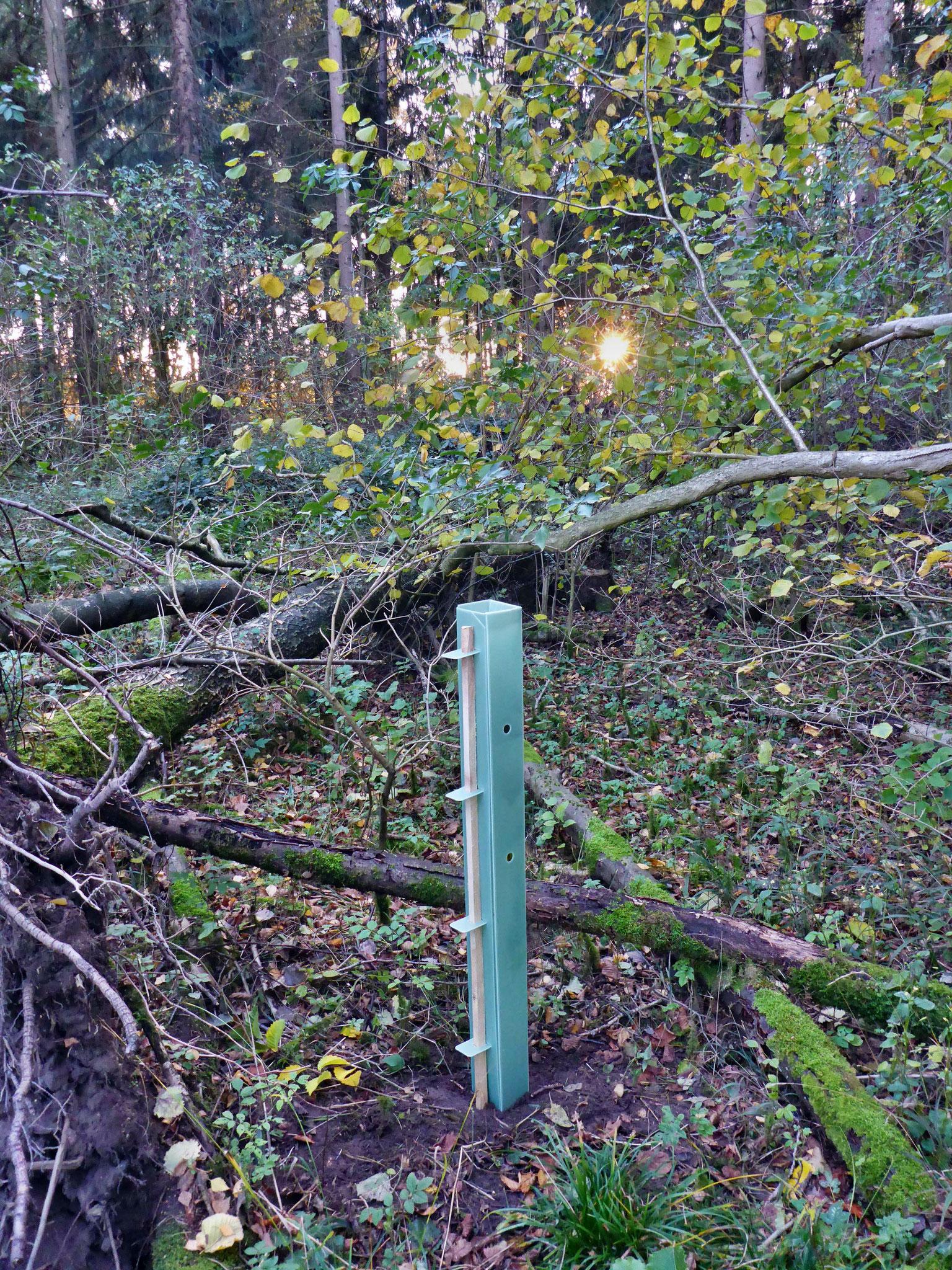 Zum ersten Mal kam diese stabile Version des Jungbaumschutzes zum Einsatz.