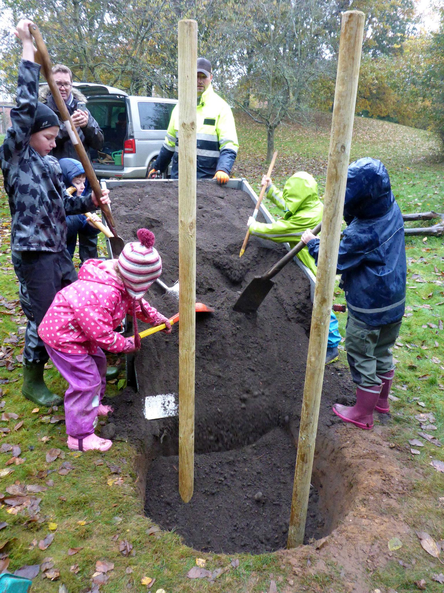 Fertig gemischte Pflanzerde vom Komposthof kam in das Pflanzloch.