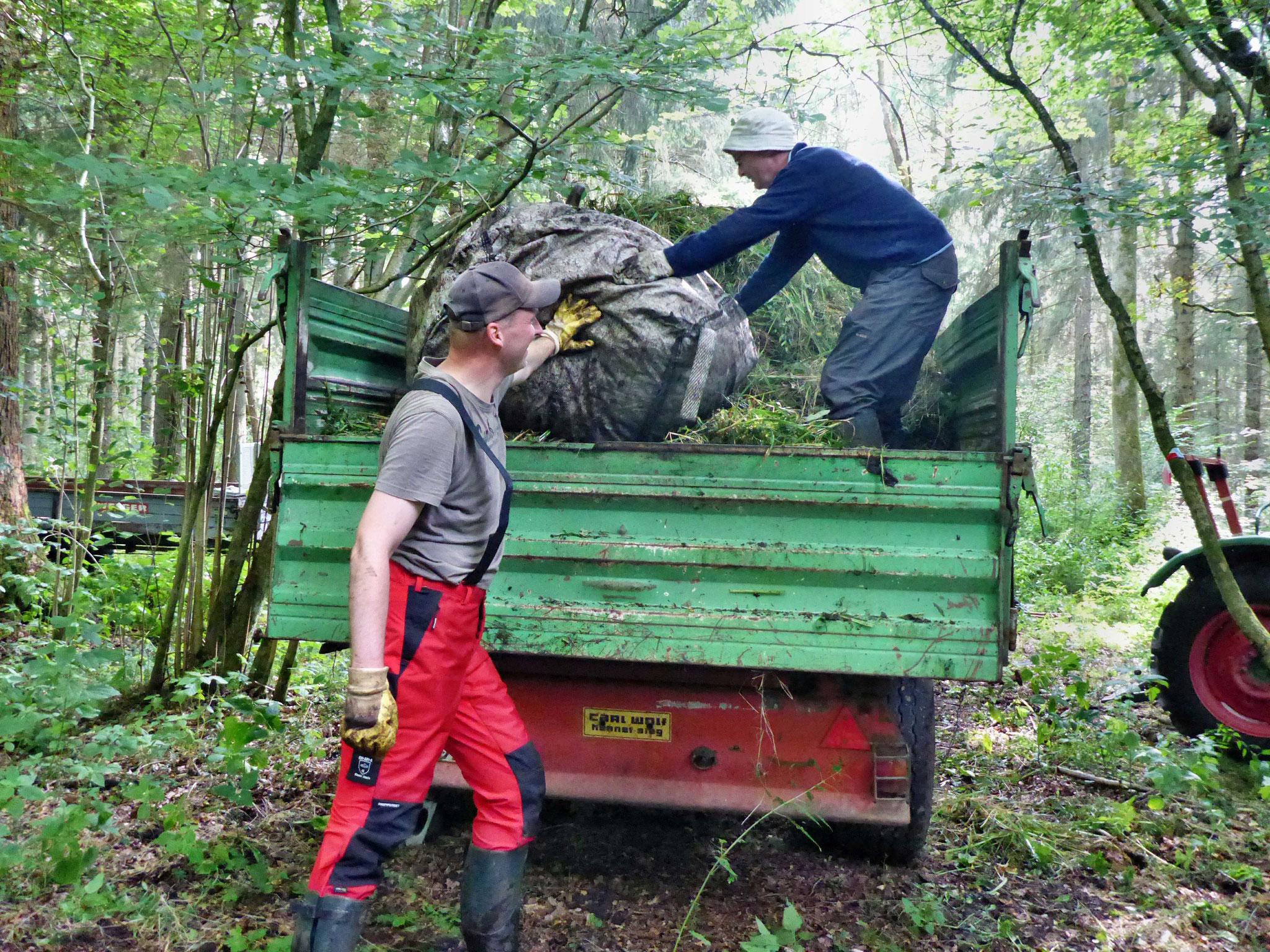Verladen des Mahdgutes auf den bereit stehenden Anhänger der Kompostierungsanlage.