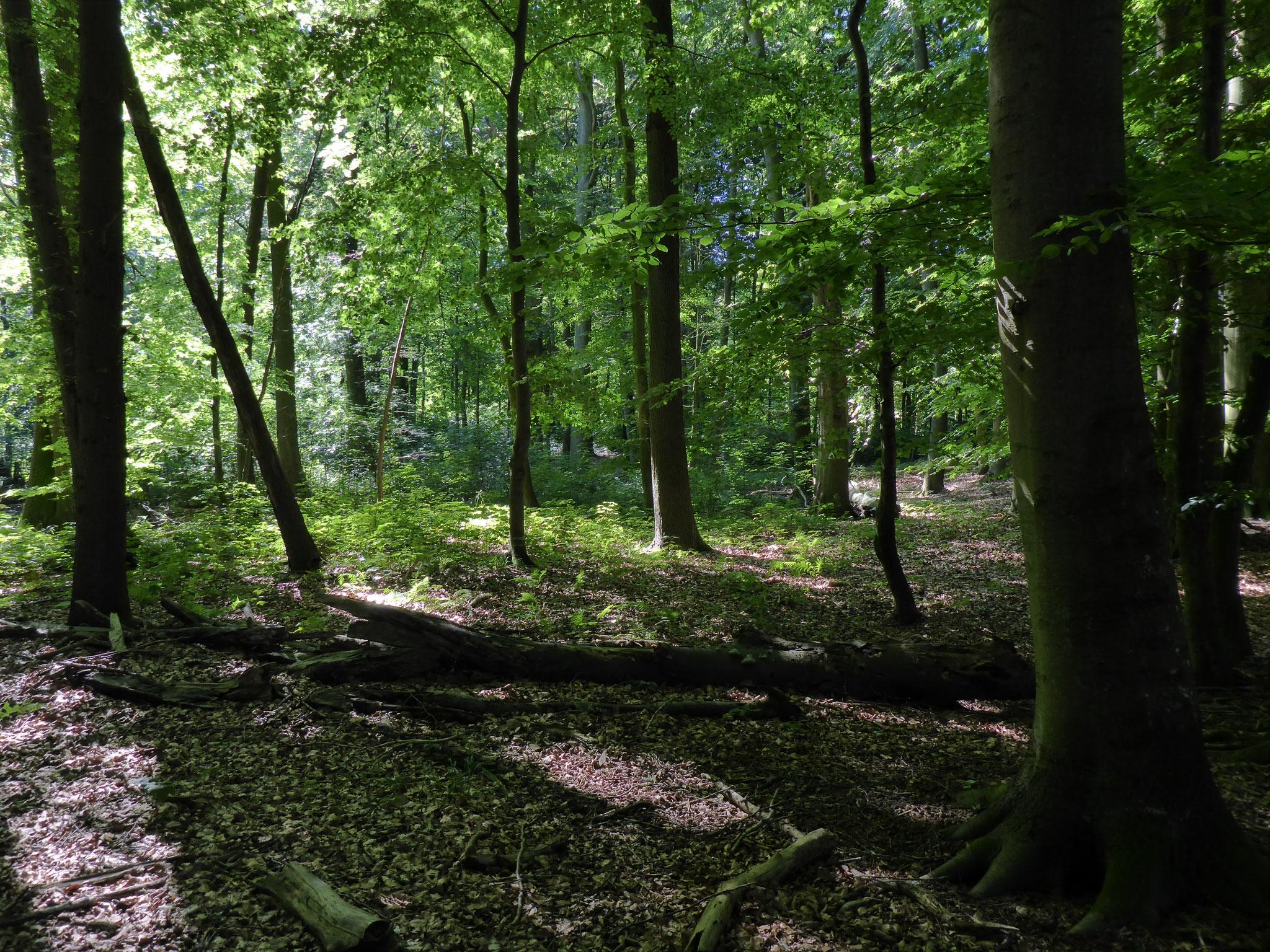 Der Fledermauswald im Sommer 2017