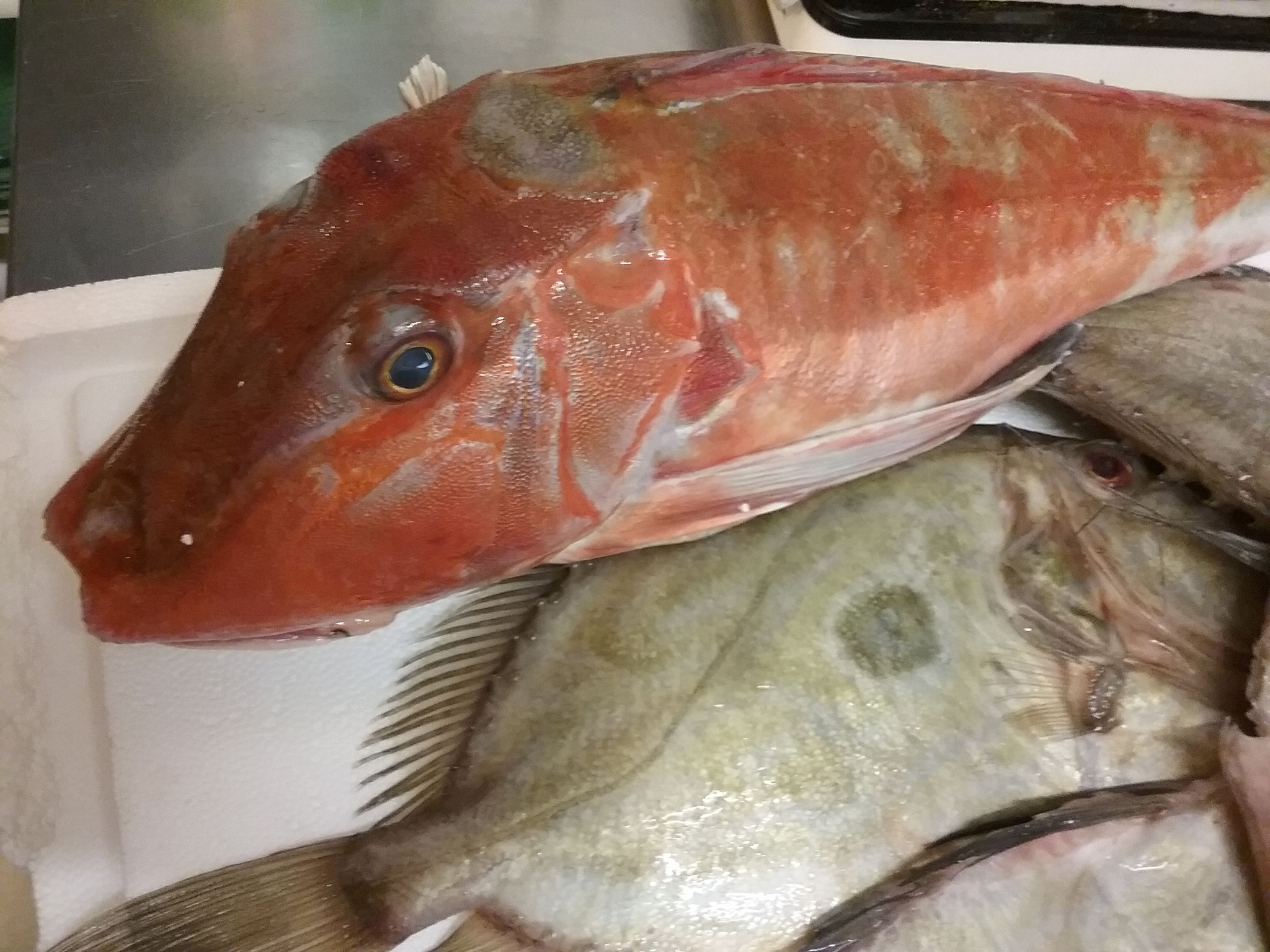 Fournisseur de poissons, Christine et Thierry Lamotte de Dolus L Ora Maritana