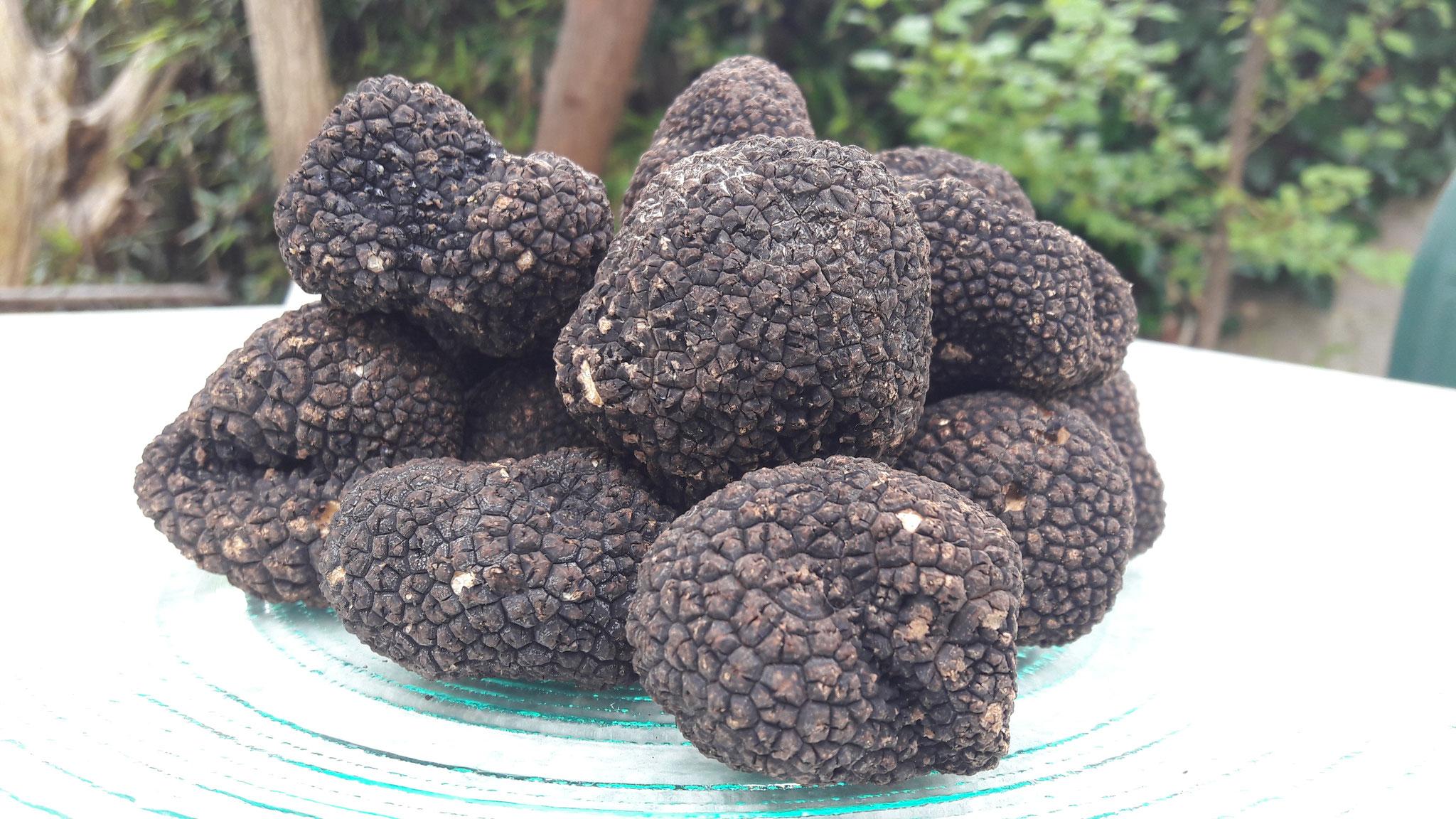 Fournisseur de Truffe et produits truffes, Terre de Diamant à Tonnay Charentes