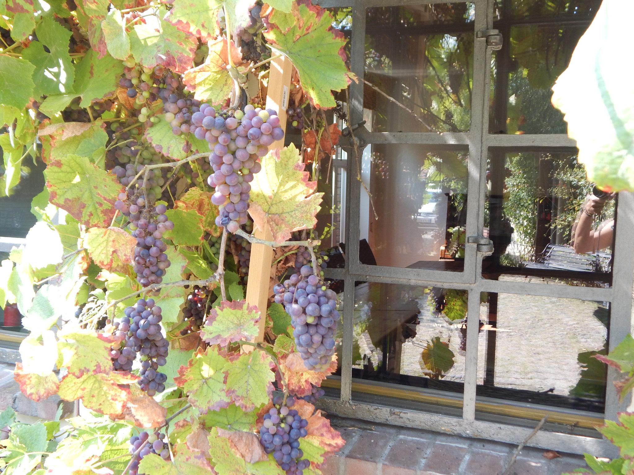 Weinberankter Innenhof mit Gästeterrrasse im Hotel Alte Försterei Kloster Zinna